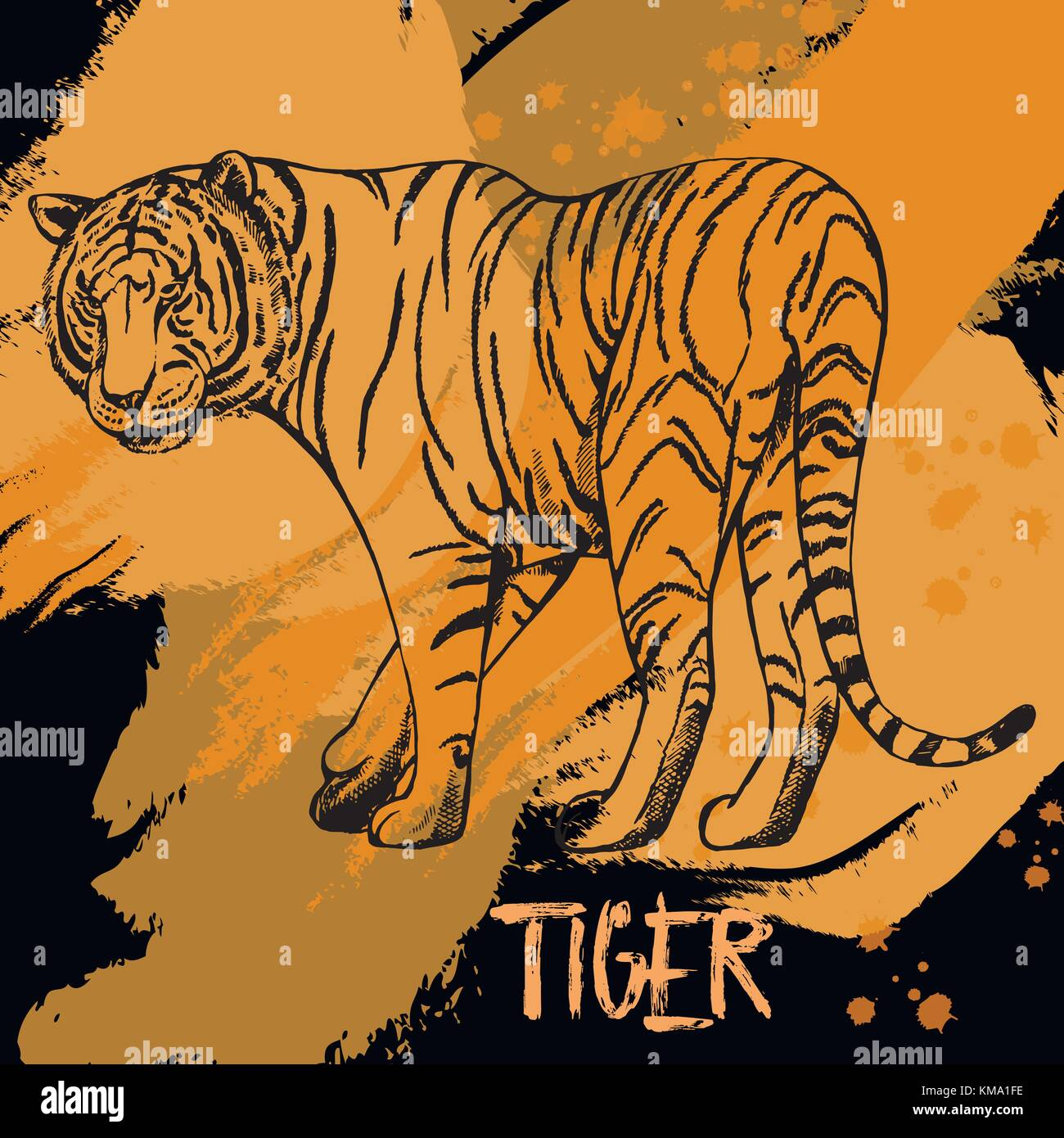 Hand drawn sketch style tiger. Isolated vector illustration. - Stock Image