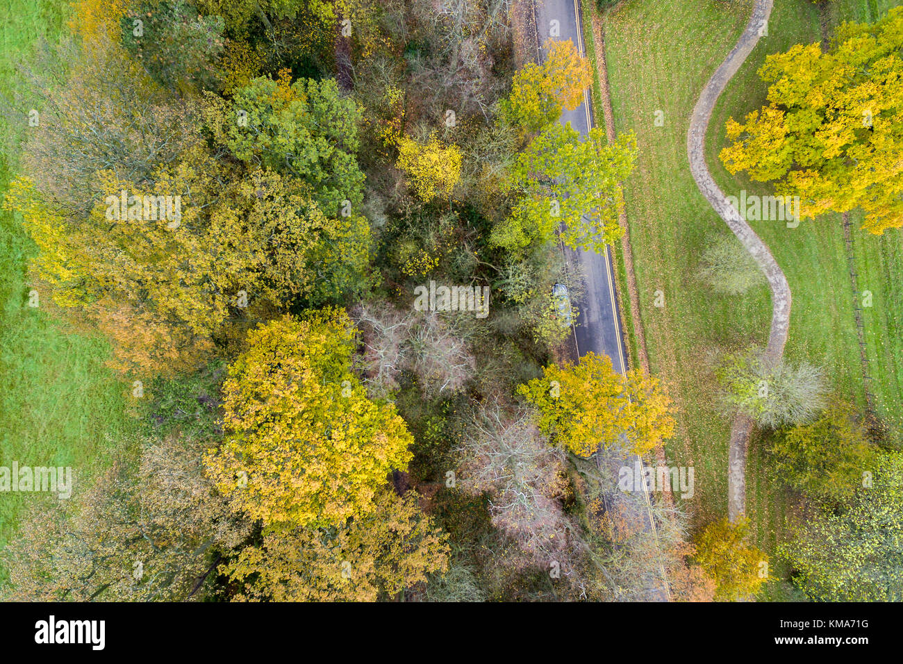 looking down on autumn colours in a UK country park - Stock Image