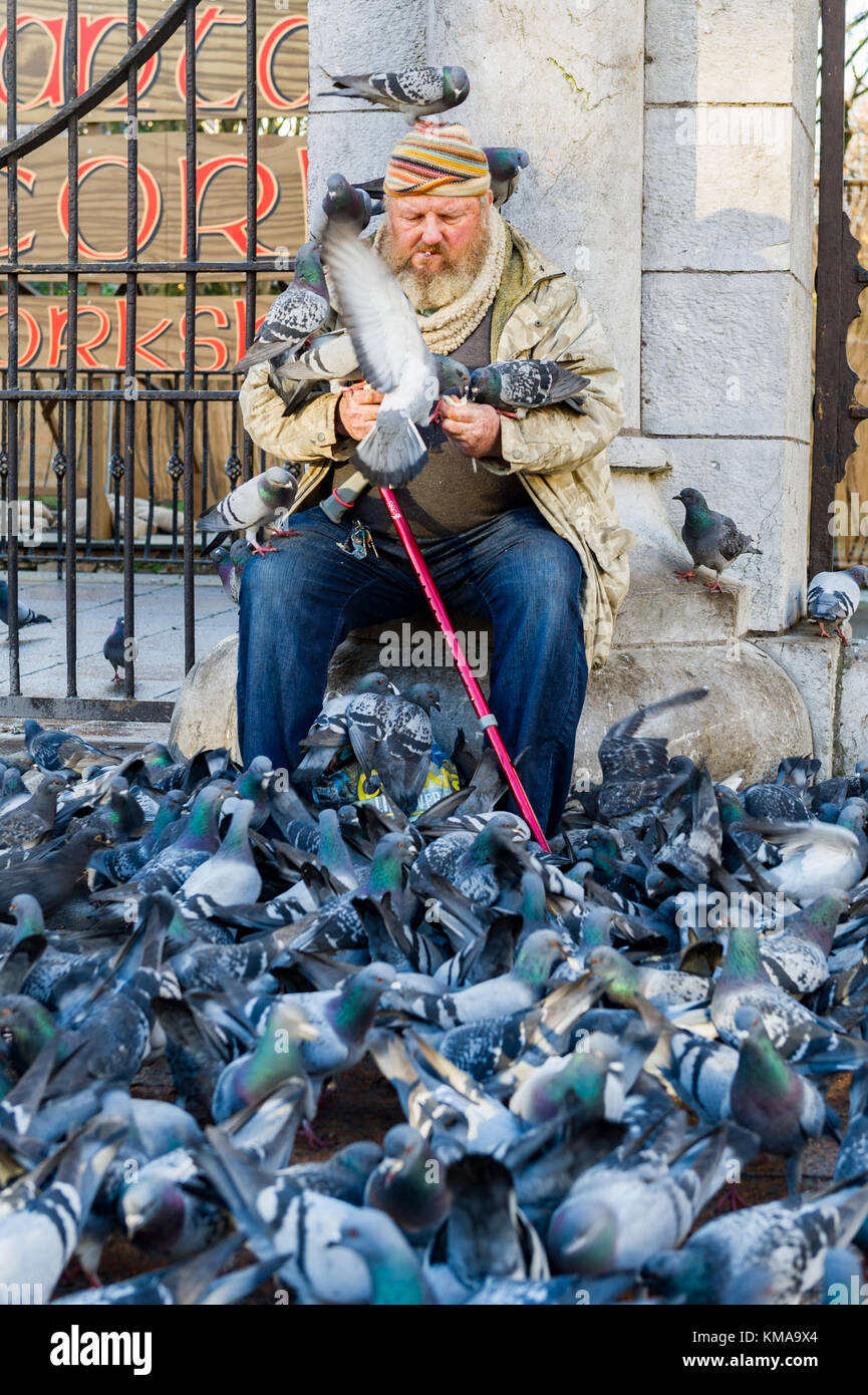 Old man who appears to be homeless or a tramp feeds pigeons outside Bishop Lucey Park in Cork, Ireland. - Stock Image