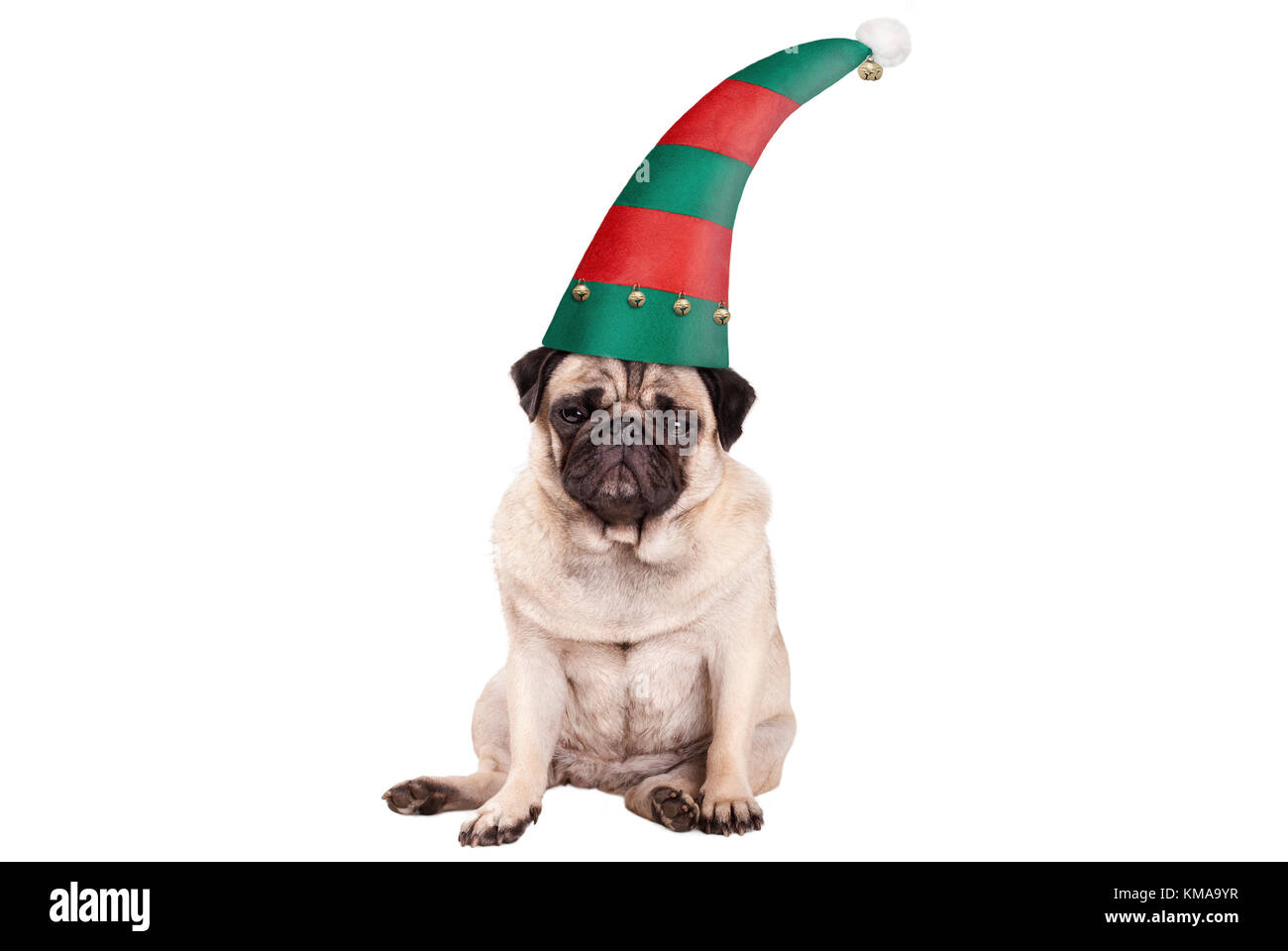grumpy faced pug puppy dog with elf hat for Christmas, sitting down, isolated on white background Stock Photo