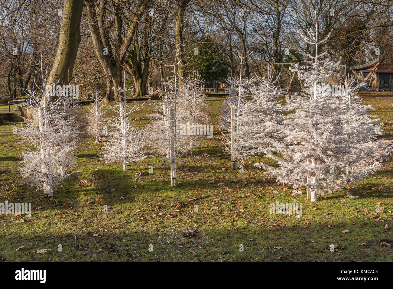 A display of white painted Christmas Trees in a public open space at Barnard Castle, Teesdale, North East England, - Stock Image