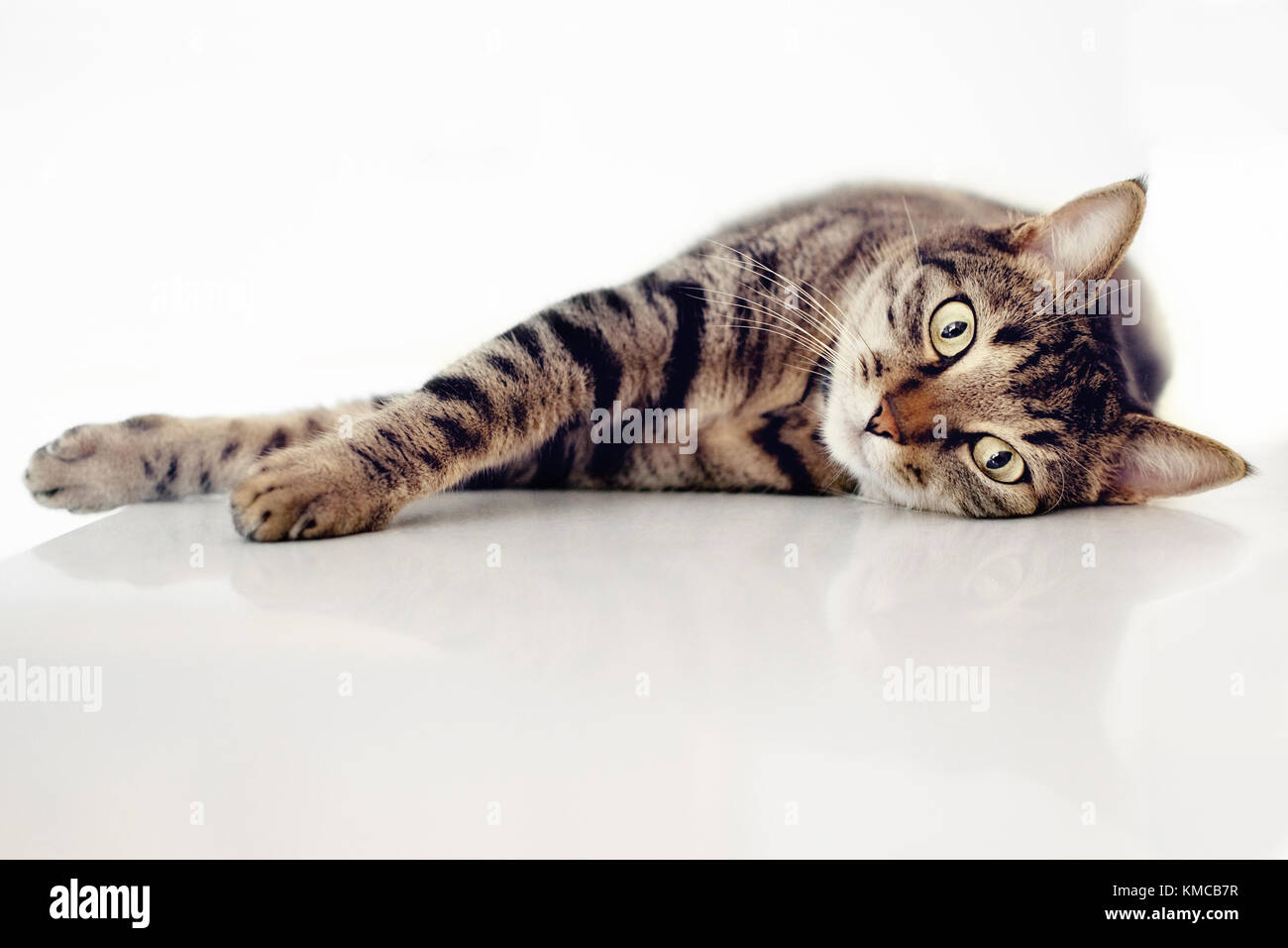 Tabby cat is lying down - Stock Image