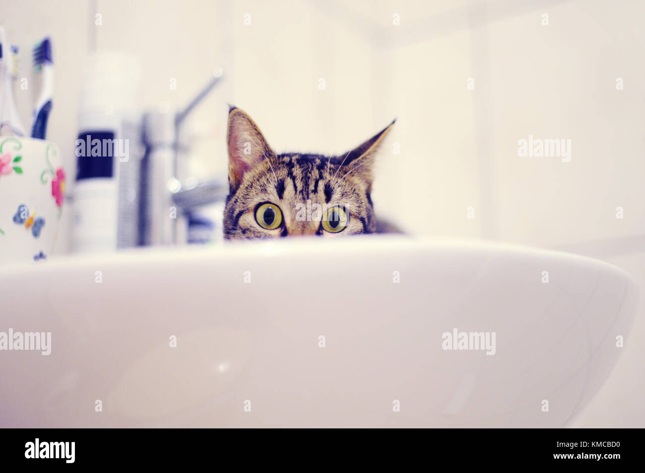 Tabby cat in the sink - Stock Image