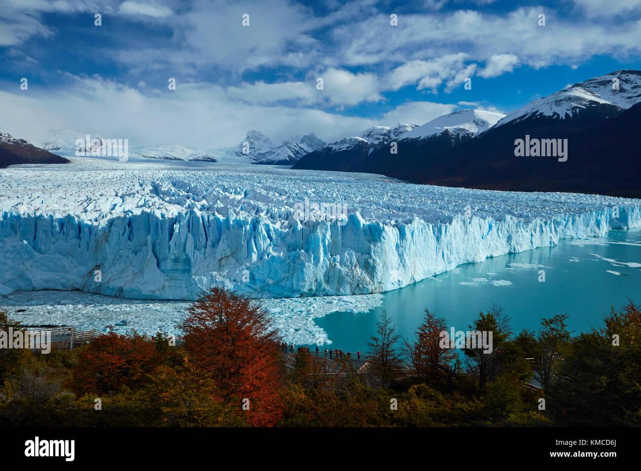 Perito Moreno Glacier, lenga trees in autumn, and tourists on walkway, Parque Nacional Los Glaciares (World Heritage Stock Photo