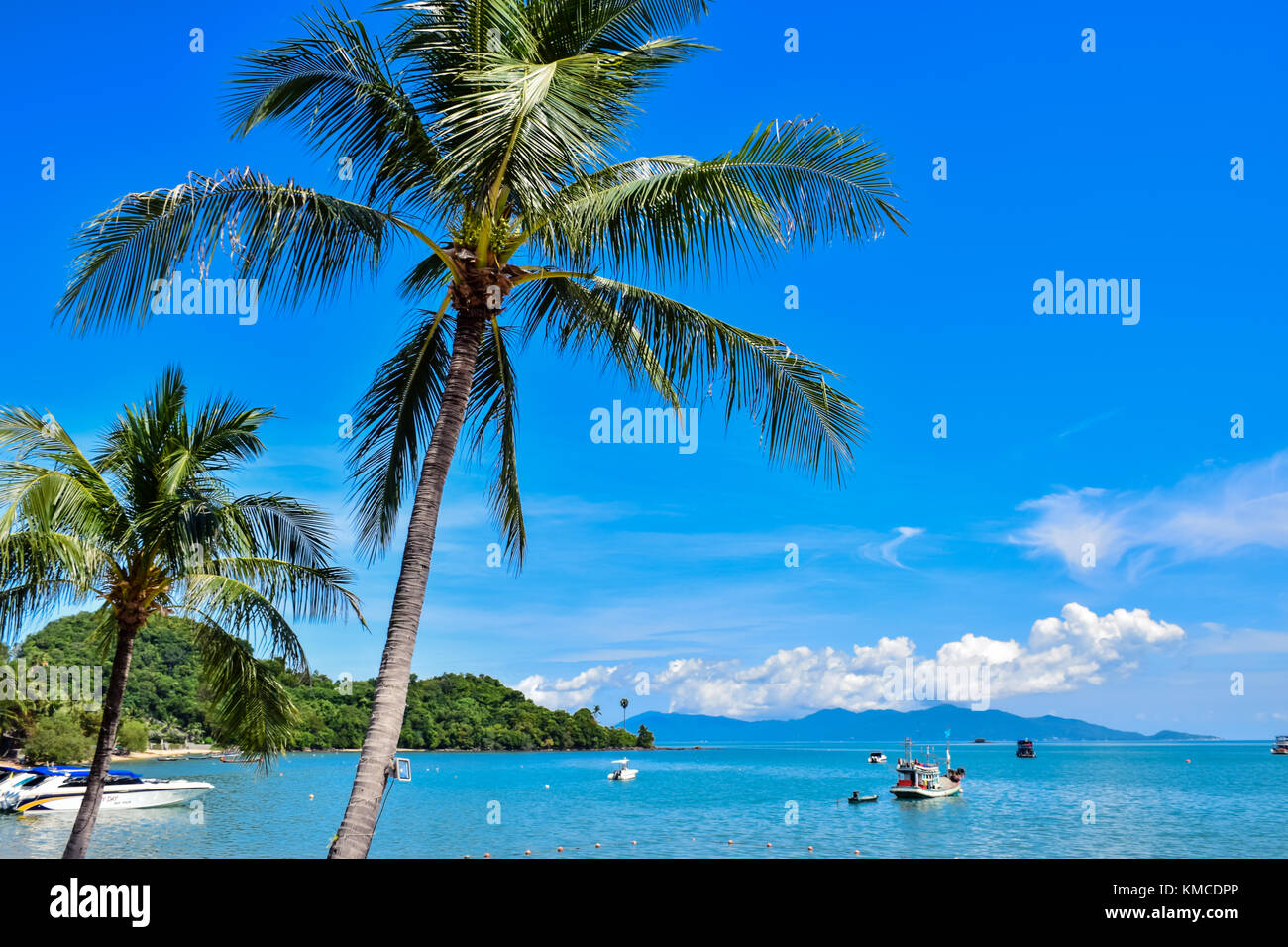 Beautiful tropical coconut palm trees at Thailand beach of Samui island, famous vacation destination - Stock Image
