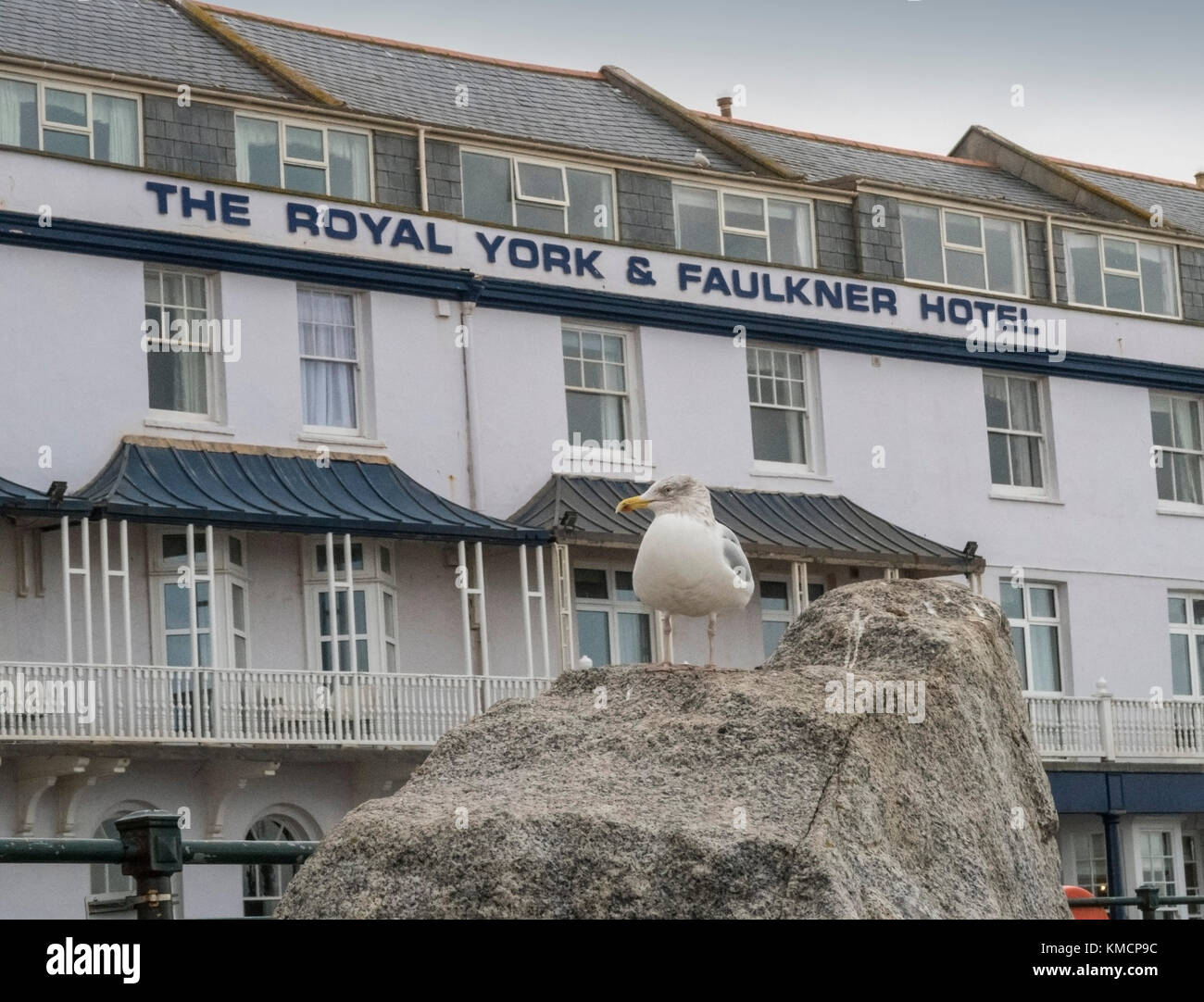 A seagull on Sidmouth seafront.Feeding seagulls is banned across East Devon.Laridae - Stock Image