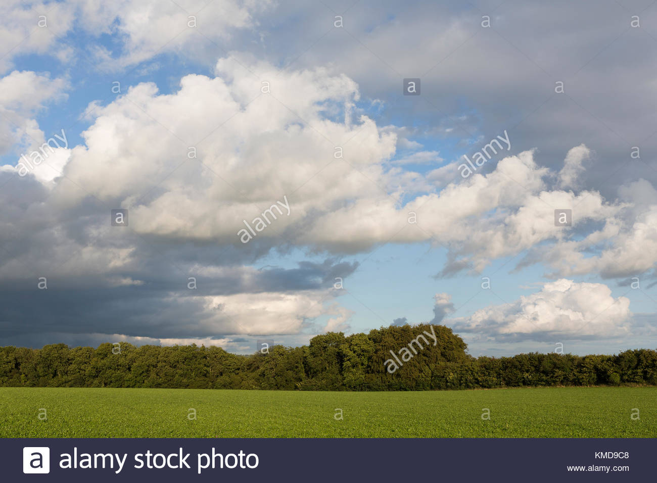 Cumulus and Stratus Cloud Stock Photo