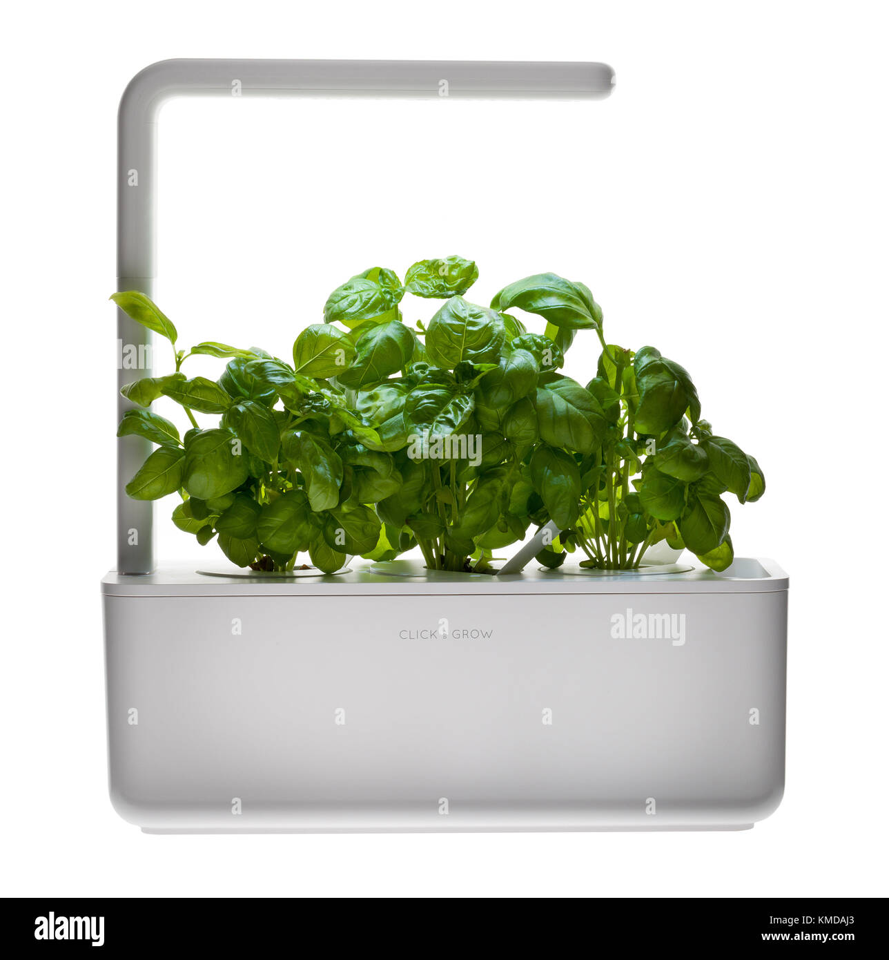Product to grow your own salad crop of basil. - Stock Image