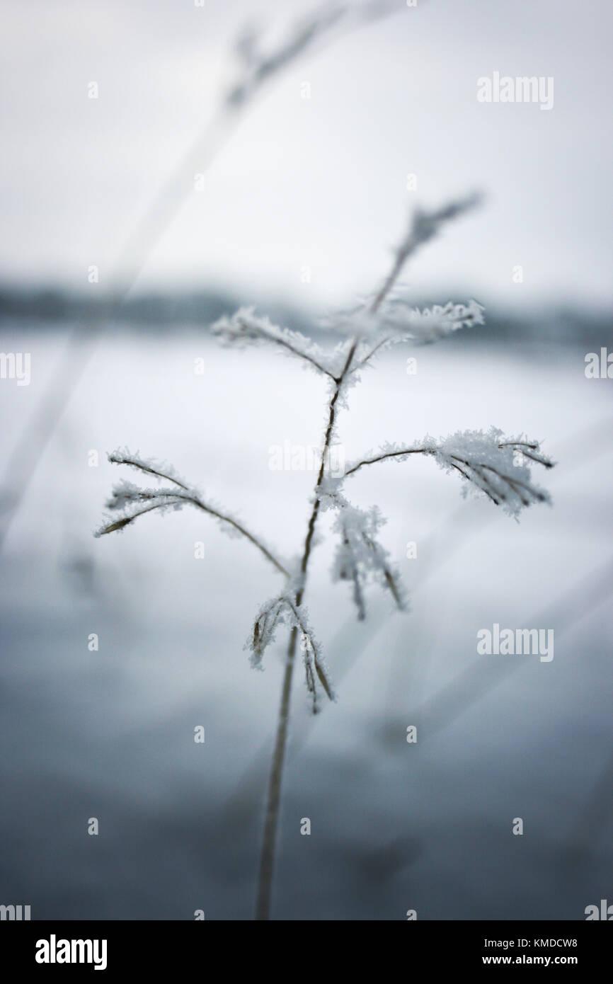 winter detail Stock Photo