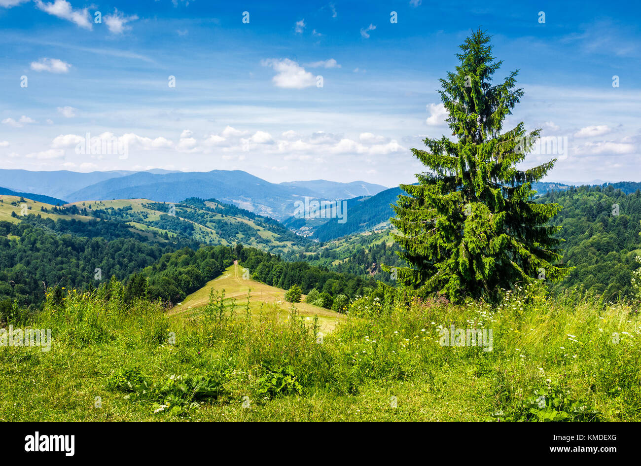 spruce tree on the edge of e hill. gorgeous summer landscape with mountain ridge in the distance - Stock Image