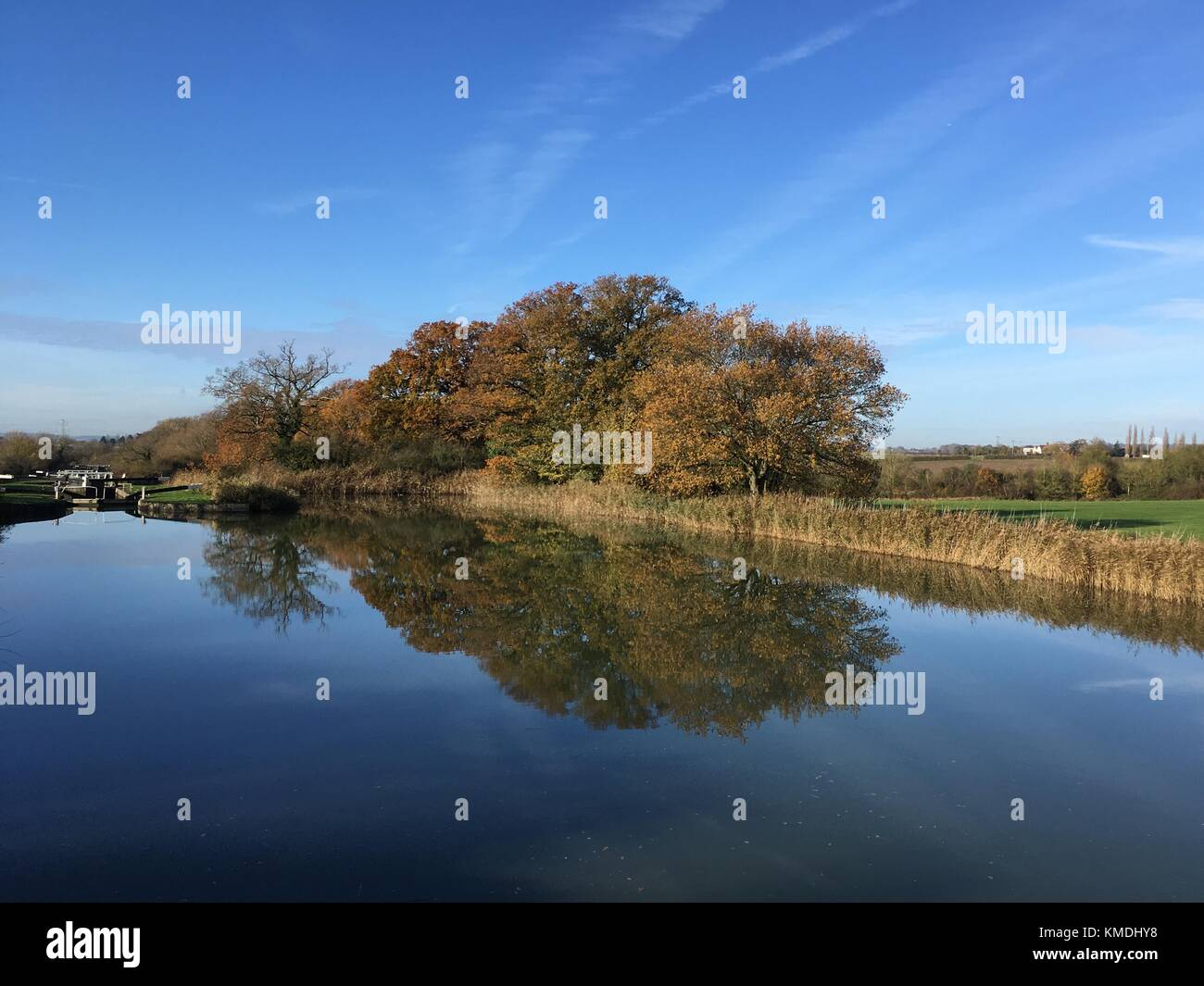 Trees pictured along the towpath of the Kennet and Avon Canal near Devizes in Wiltshire U.K. - Stock Image