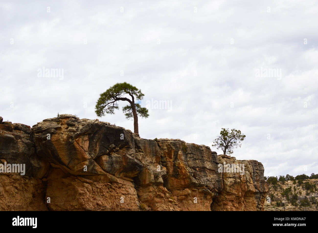 newest 2288e 1b2b8 Two beautiful trees on top of rock of the Grand canyon, Arizona, USA. One of  the world wonder.