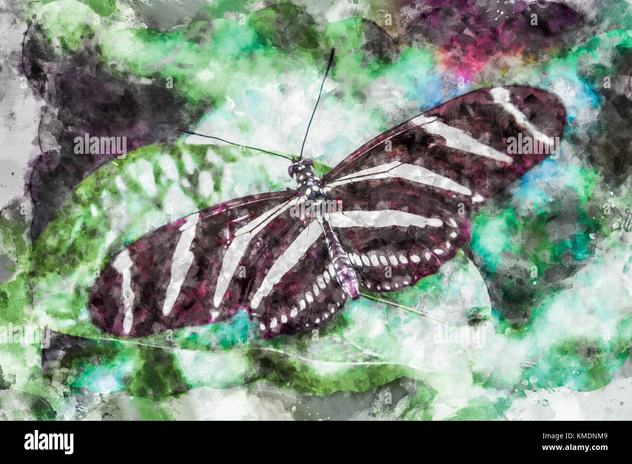 Watercolour illustration of adult Heliconius Charithonia (Zebra Longwing) butterfly Stock Photo