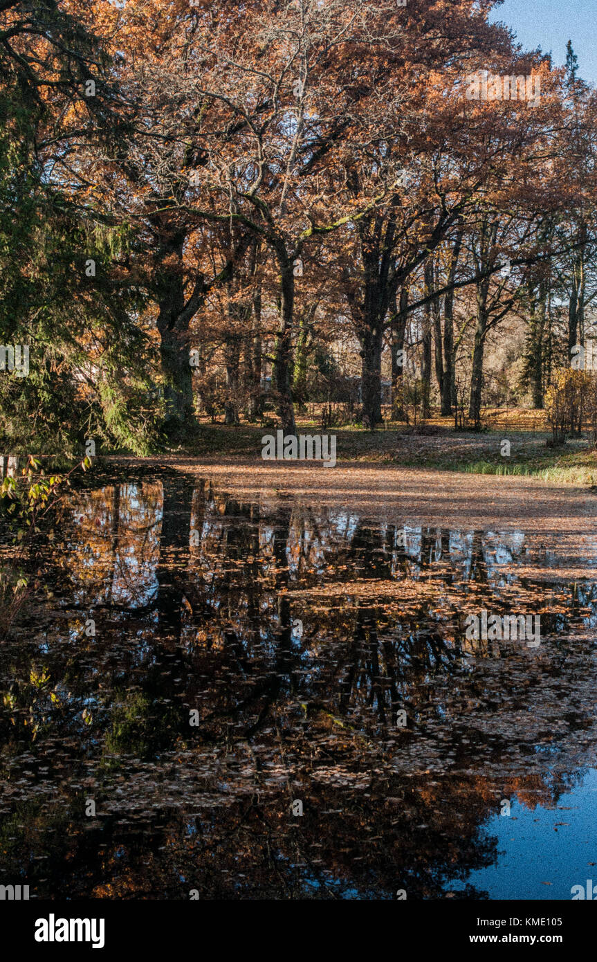 Sunny day in a manors park. Tree reflections on a surface. - Stock Image