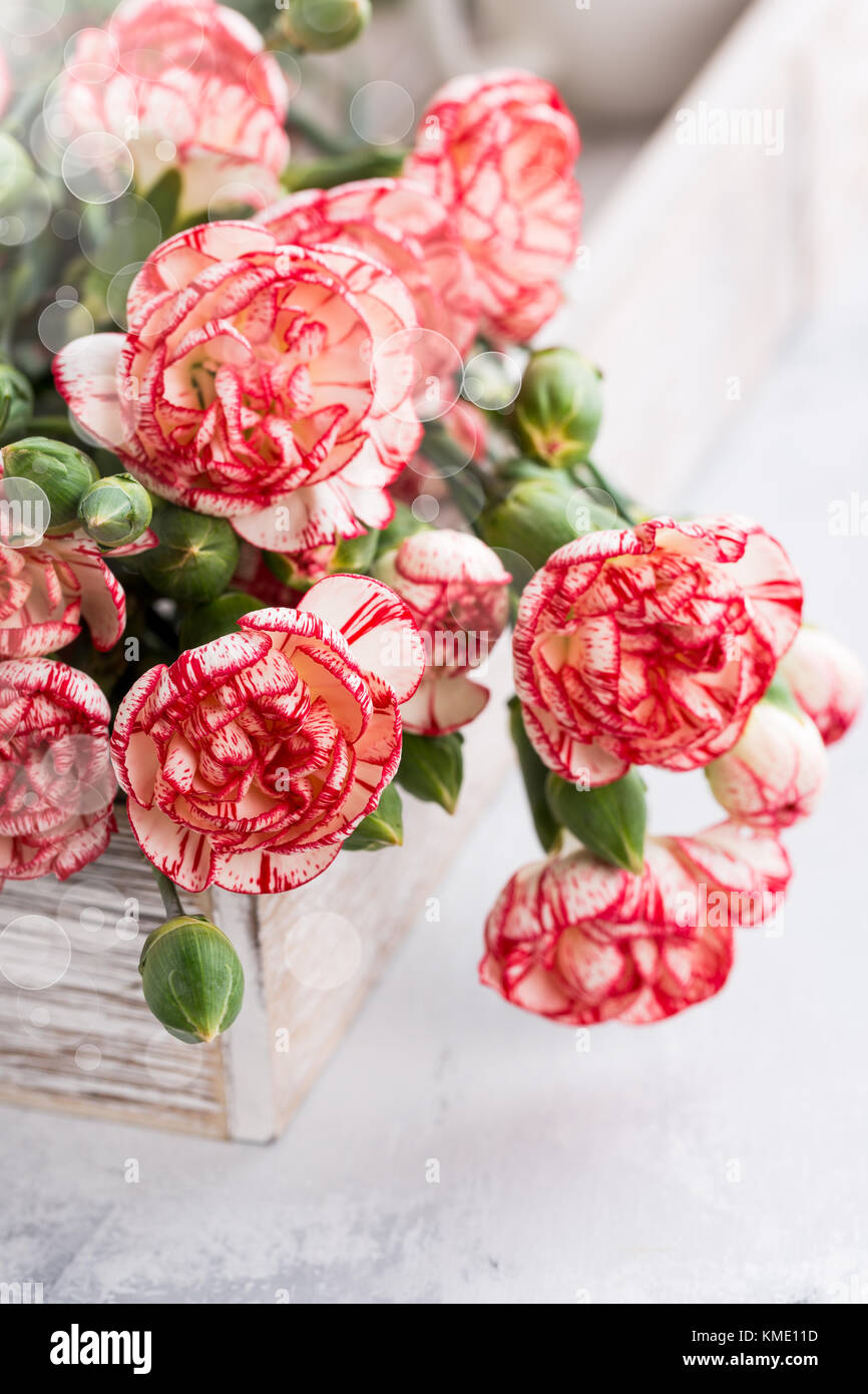 Pink Carnation Flowers Bouquet Copy Stock Photos Pink Carnation