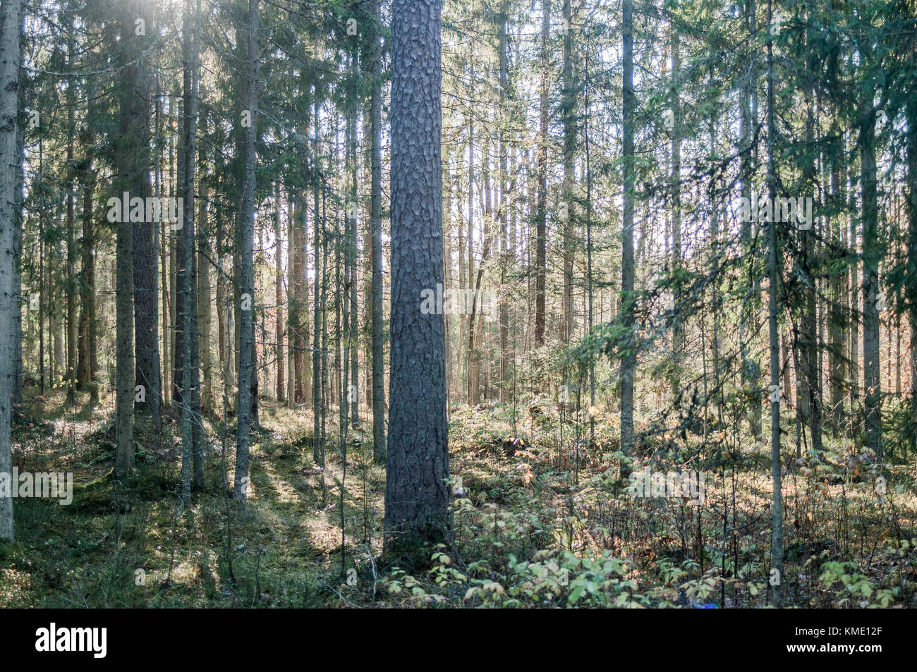 Forest in late autumn. - Stock Image