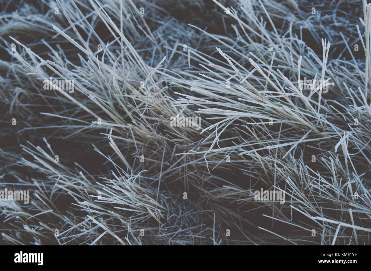 Sapless grass. Hoarfrost. Closeup. - Stock Image
