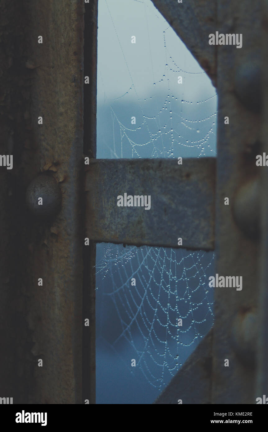 Spider web in morning dew. Cool light. - Stock Image