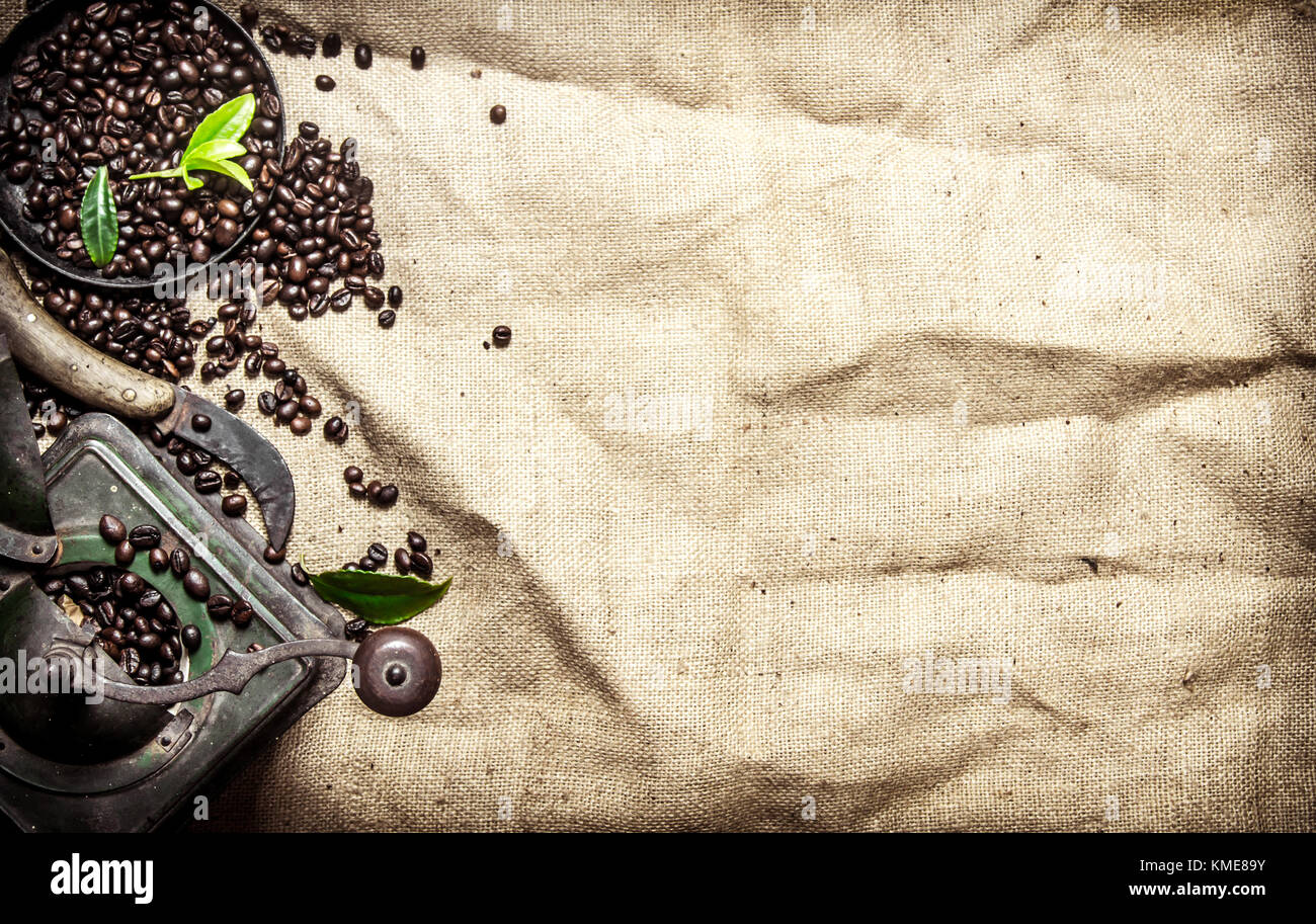 Old coffee style. Roasted grain coffee with cinnamon and different old tools. On textile sack. - Stock Image