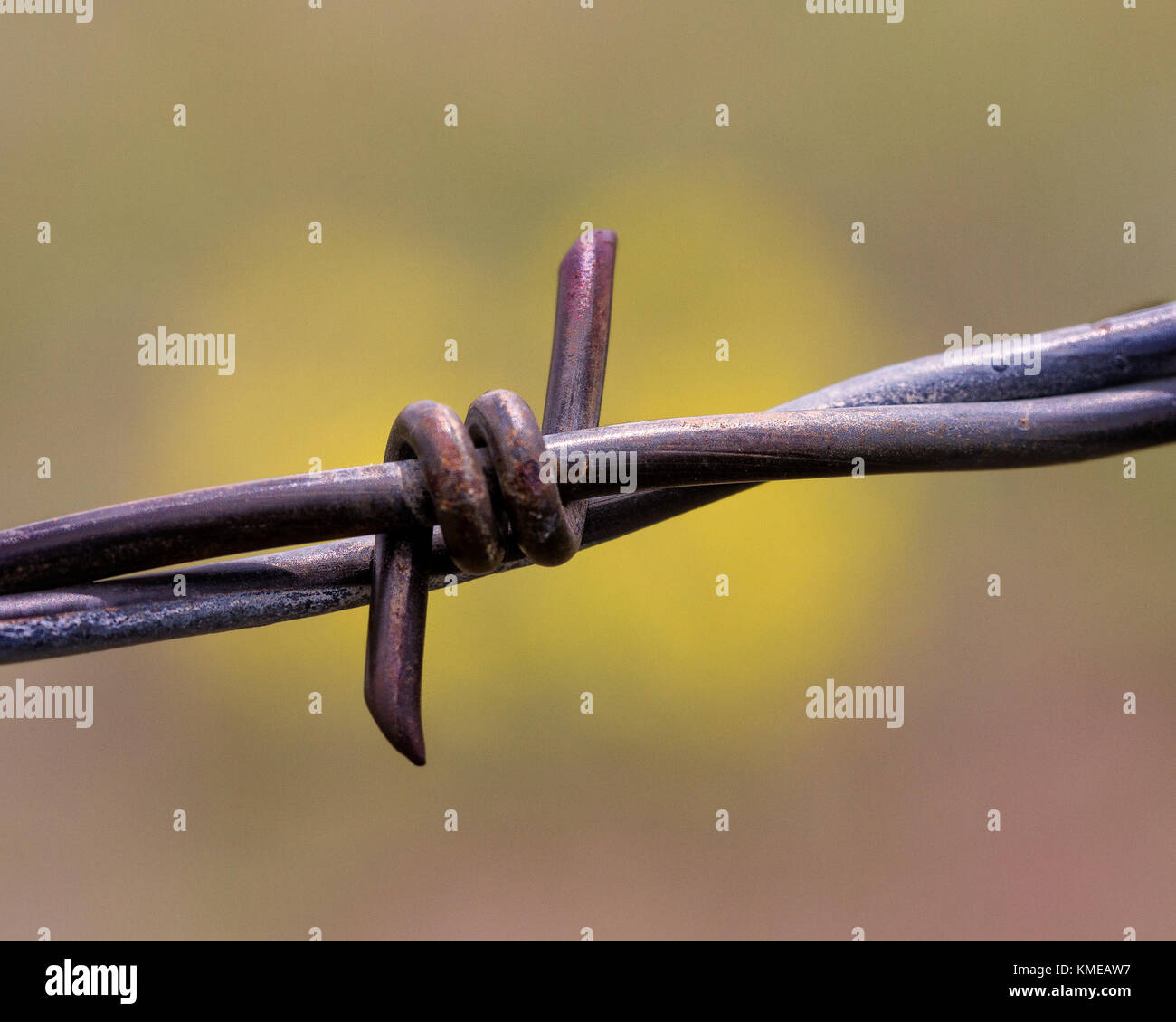 Agricultural Fencing Stock Photos Electric Accessories 7 Strand Fence Wire A Single Of Barbed Image