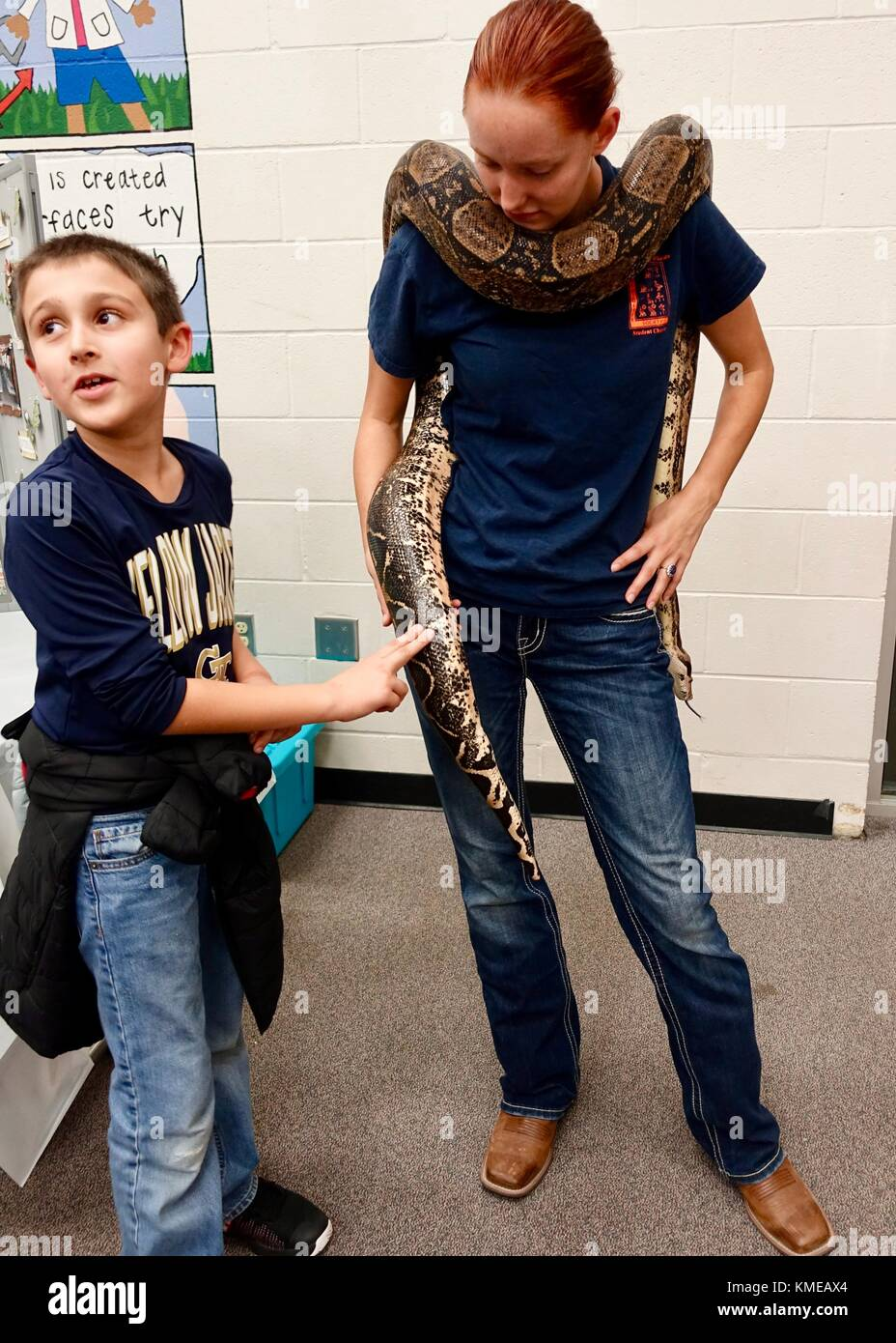 USA, Florida. Boy tentatively touching large boa constrictor snake held by university student at a science open - Stock Image