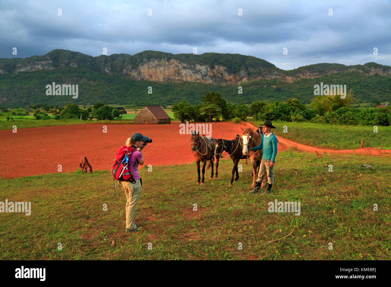 American woman photographing her guide and horses during riding tour through tobacco fincas plantations in Vinales - Stock Image