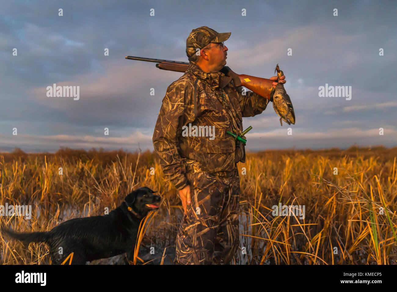 hunter holding duck and dog, Suisun Marsh, Suisun City, California, USA - Stock Image