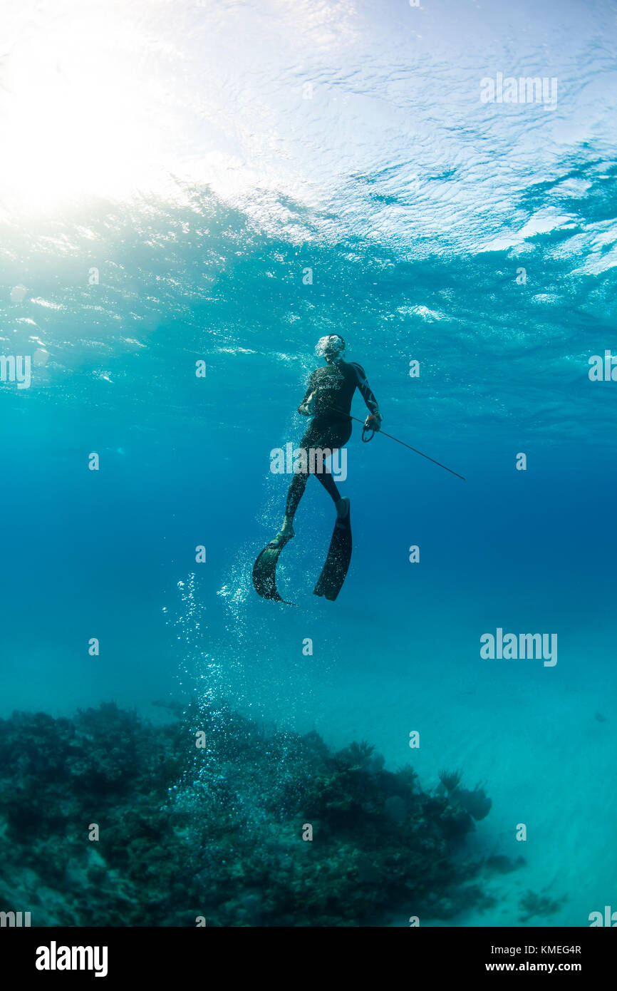 Diver surfacing with caught margate fish while spearfishing in ocean, Clarence Town, Long Island, Bahamas - Stock Image