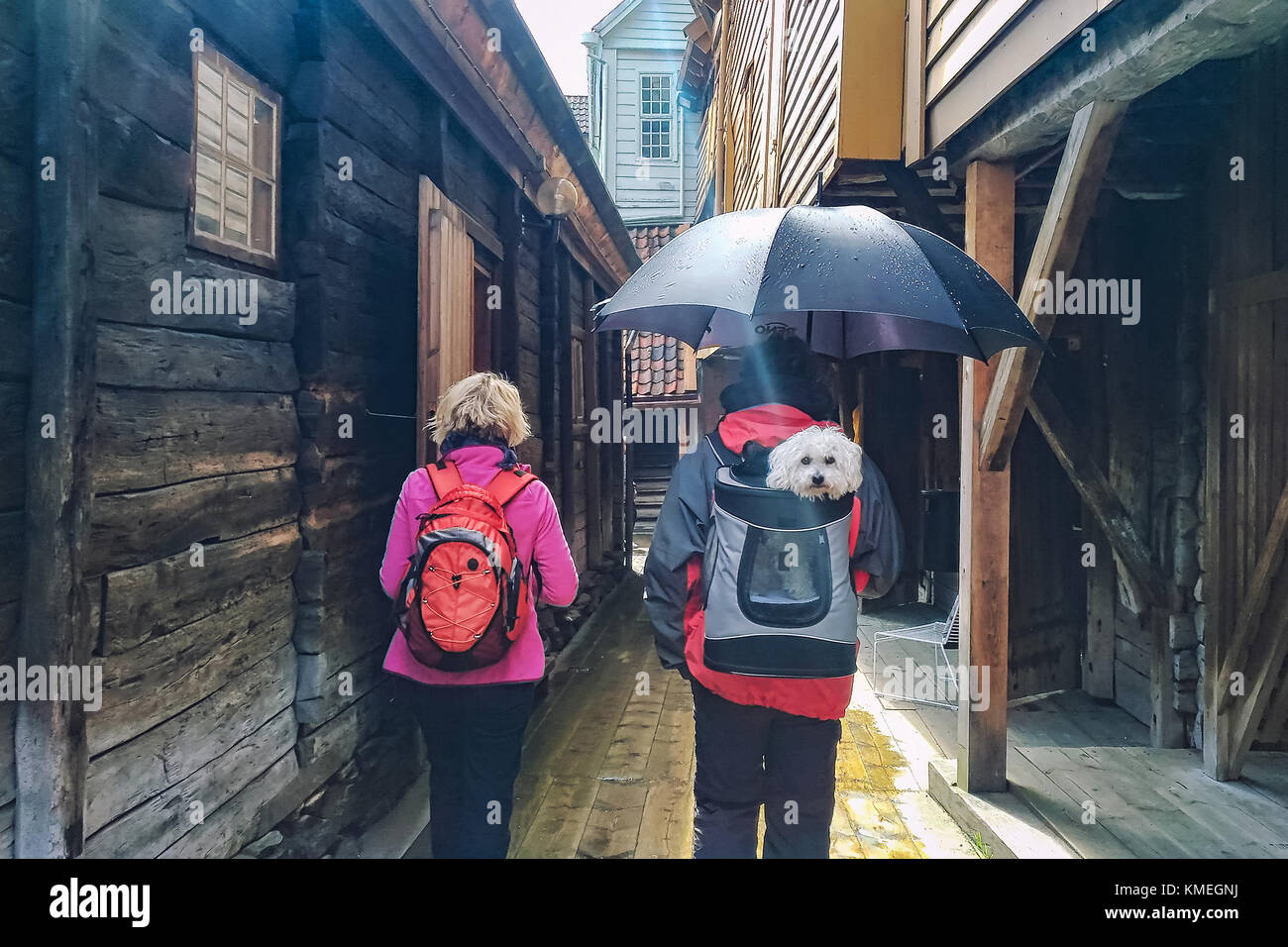 A couple of outdoor tourists with a dog in a backpack in streets of Bergen, Norway - Stock Image
