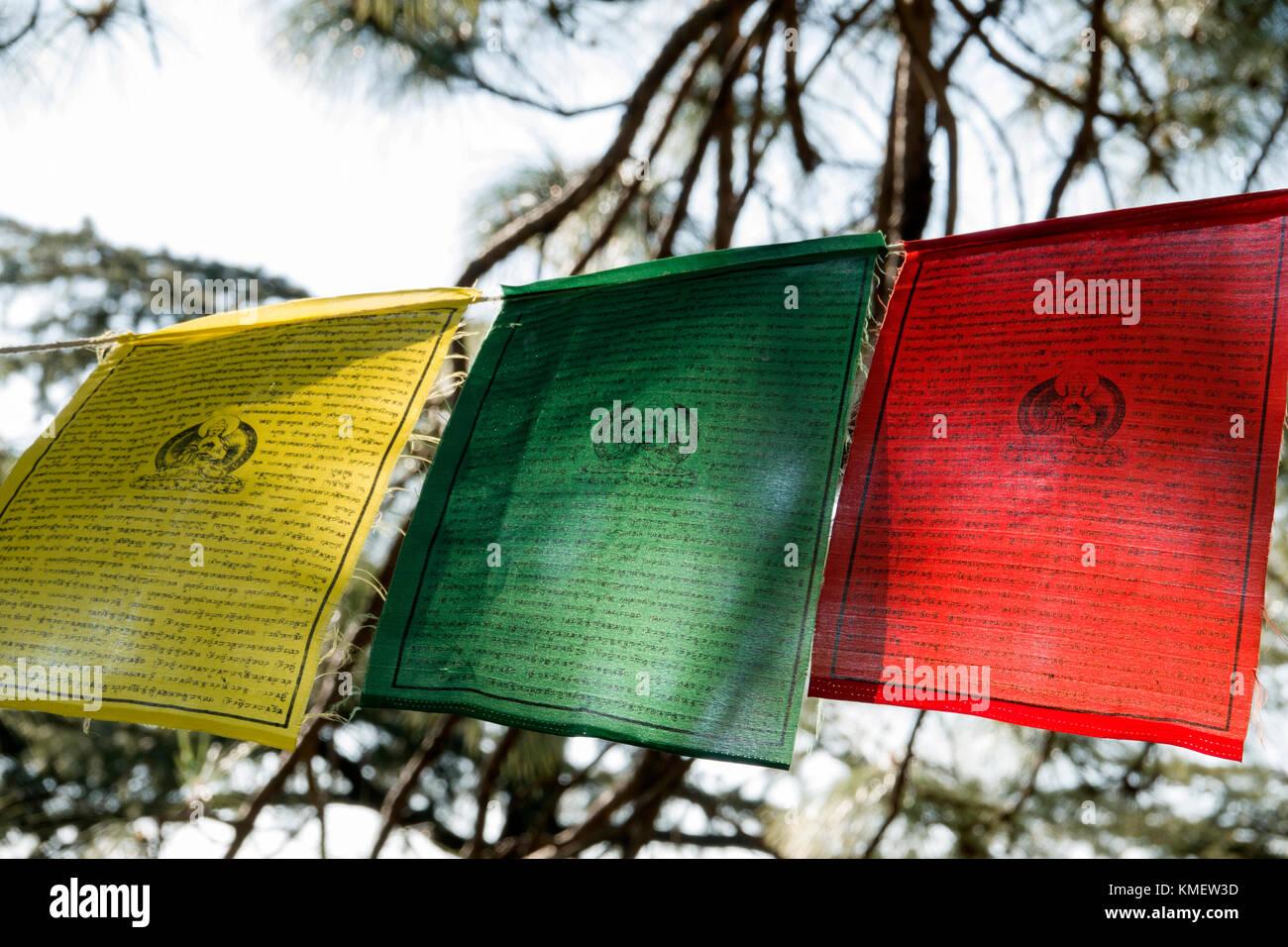 Tibetan prayer flags hanging in trees at Mcleod Ganj, Himachal Pradesh - Stock Image