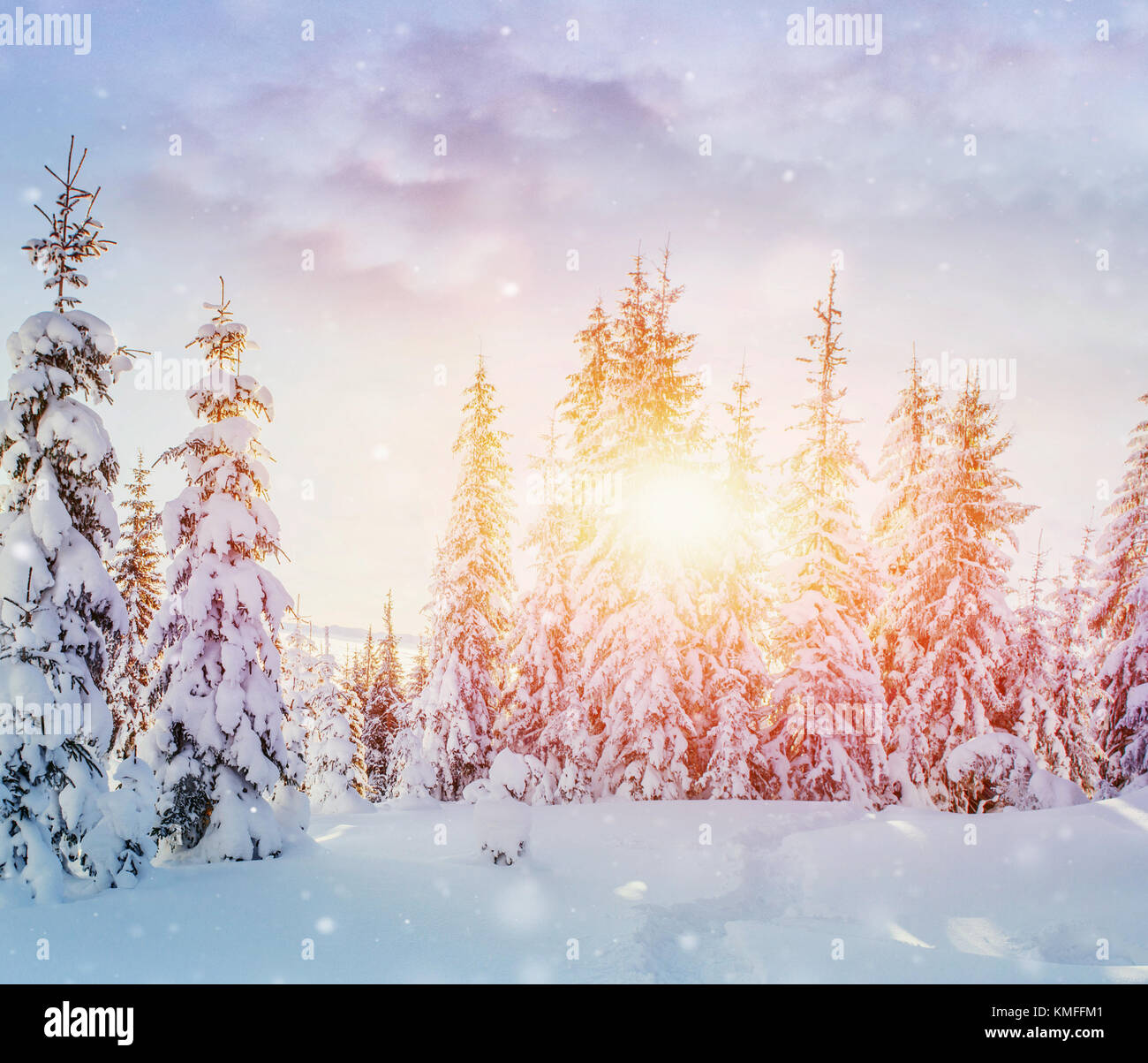 Mysterious winter landscape majestic mountains in winter. Magical winter snow covered tree. Photo greeting card. - Stock Image