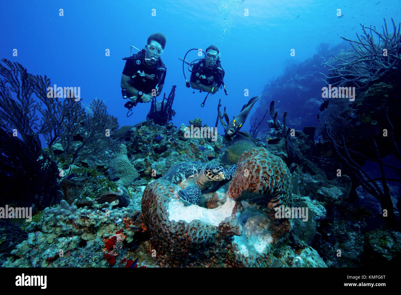 Divers watch the interaction of different species of marine life as they access the same food source. Stock Photo