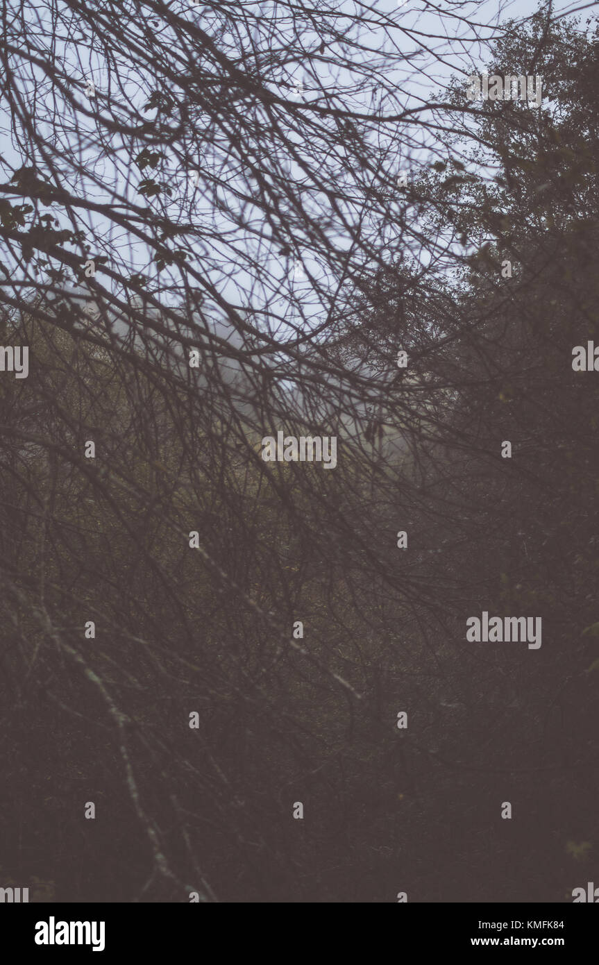Misty morning. Branches. - Stock Image
