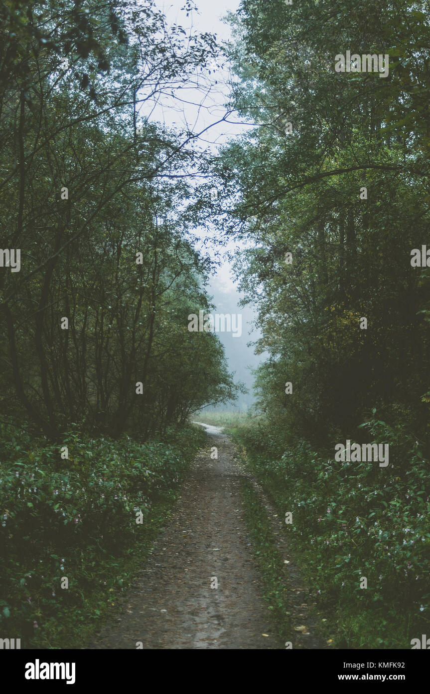 Misty forest path. Green summer morning. - Stock Image