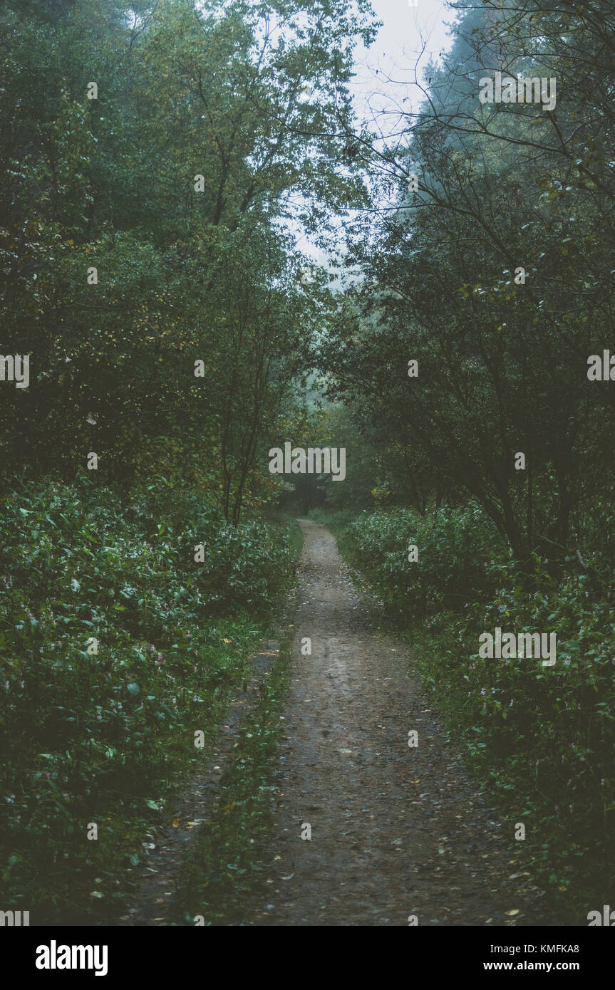 Morning in forest. Path back to home. - Stock Image