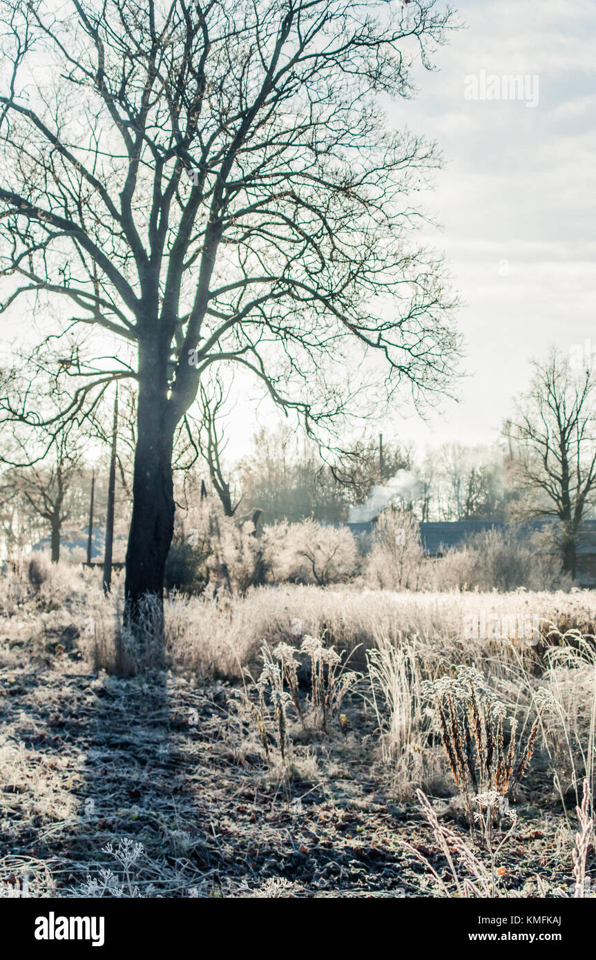Dreamy morning scene in a manors park. - Stock Image
