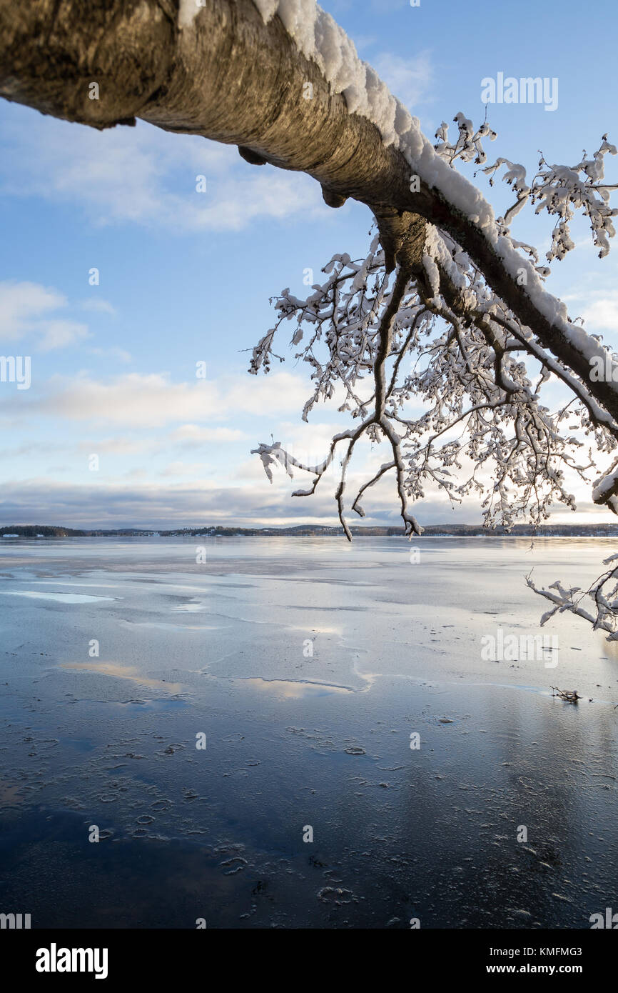 View of a fallen snowy tree and frozen Lake Pyhäjärvi on a sunny day in the winter in Tampere, Finland. - Stock Image