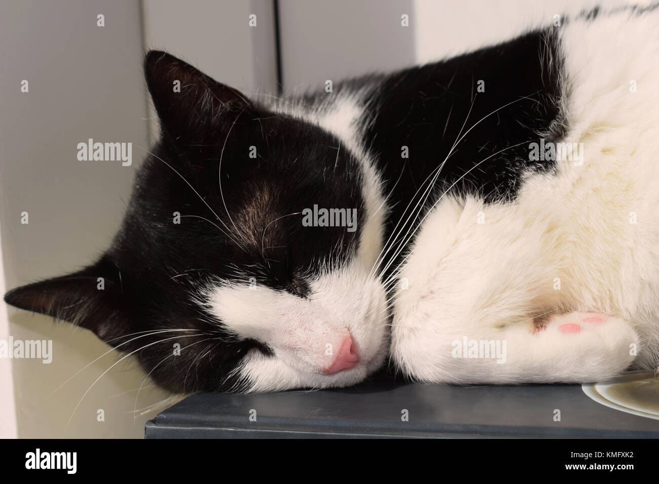 Black and white cat sleeping on a book - Stock Image