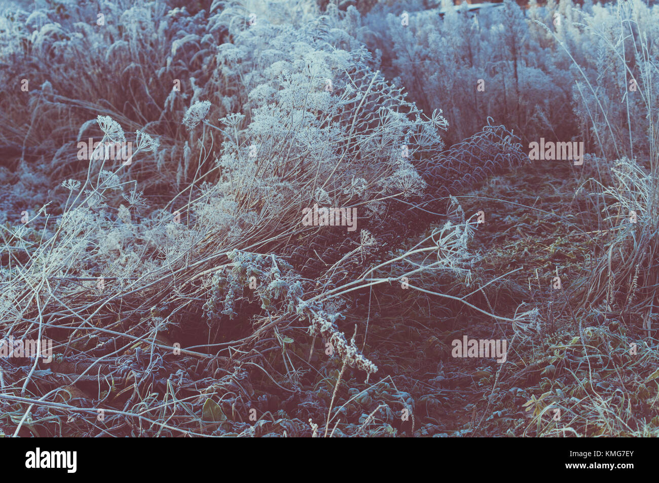 Old garden. Damaged fence. Cold hoarfrost. - Stock Image