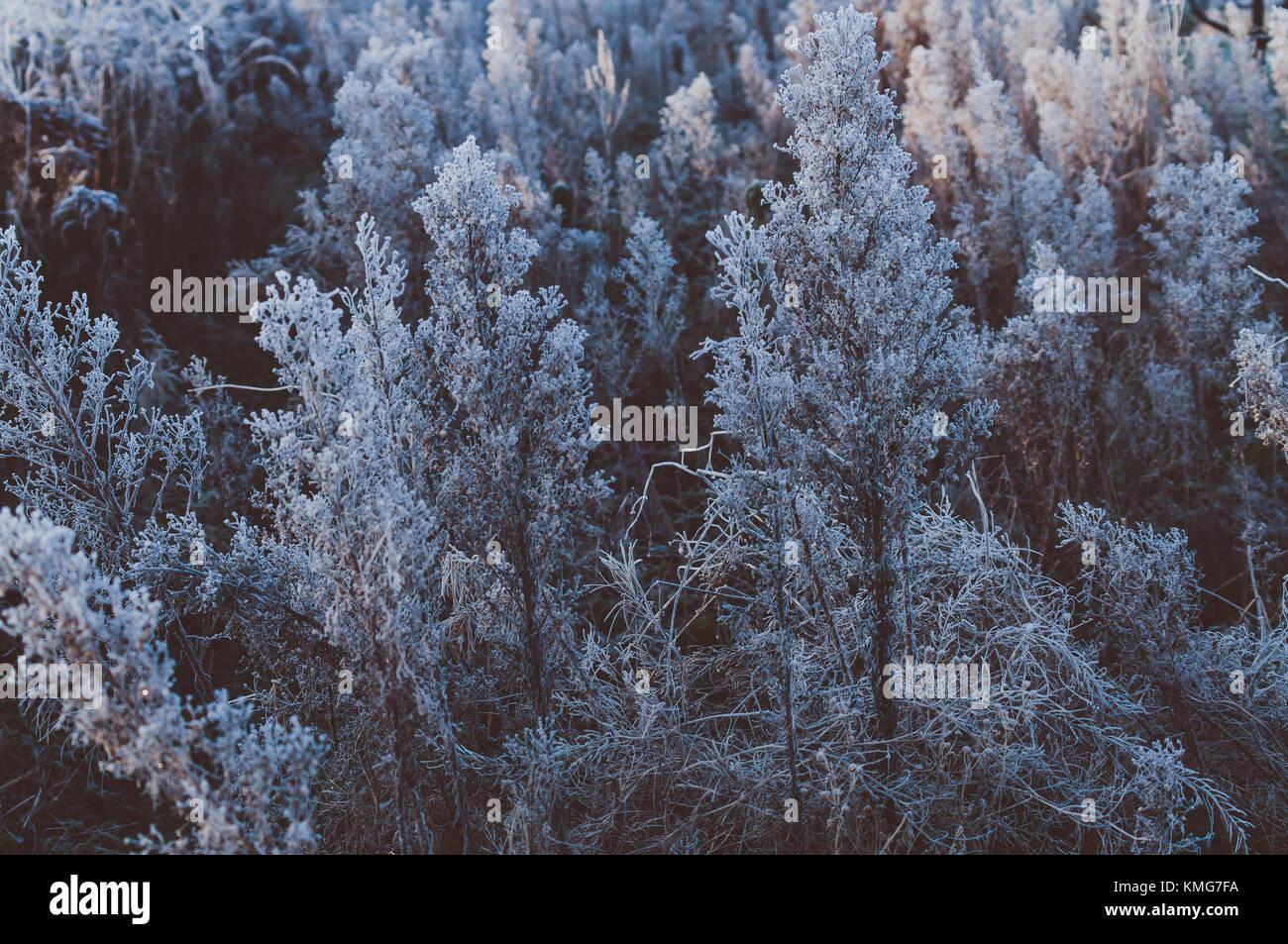 Beautiful winter morning. Hoarfrost. Cool light. Stock Photo