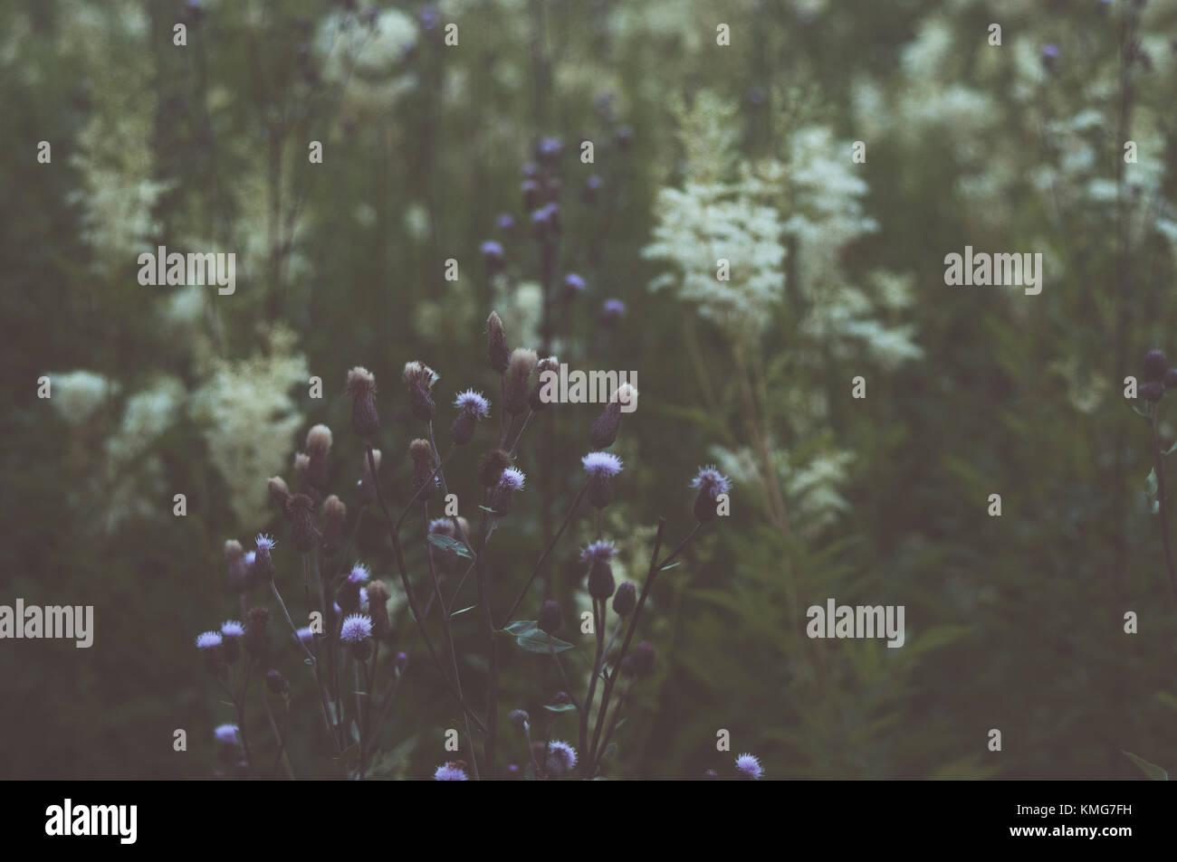 Vitntage flower photography. Fresh morning sense. - Stock Image