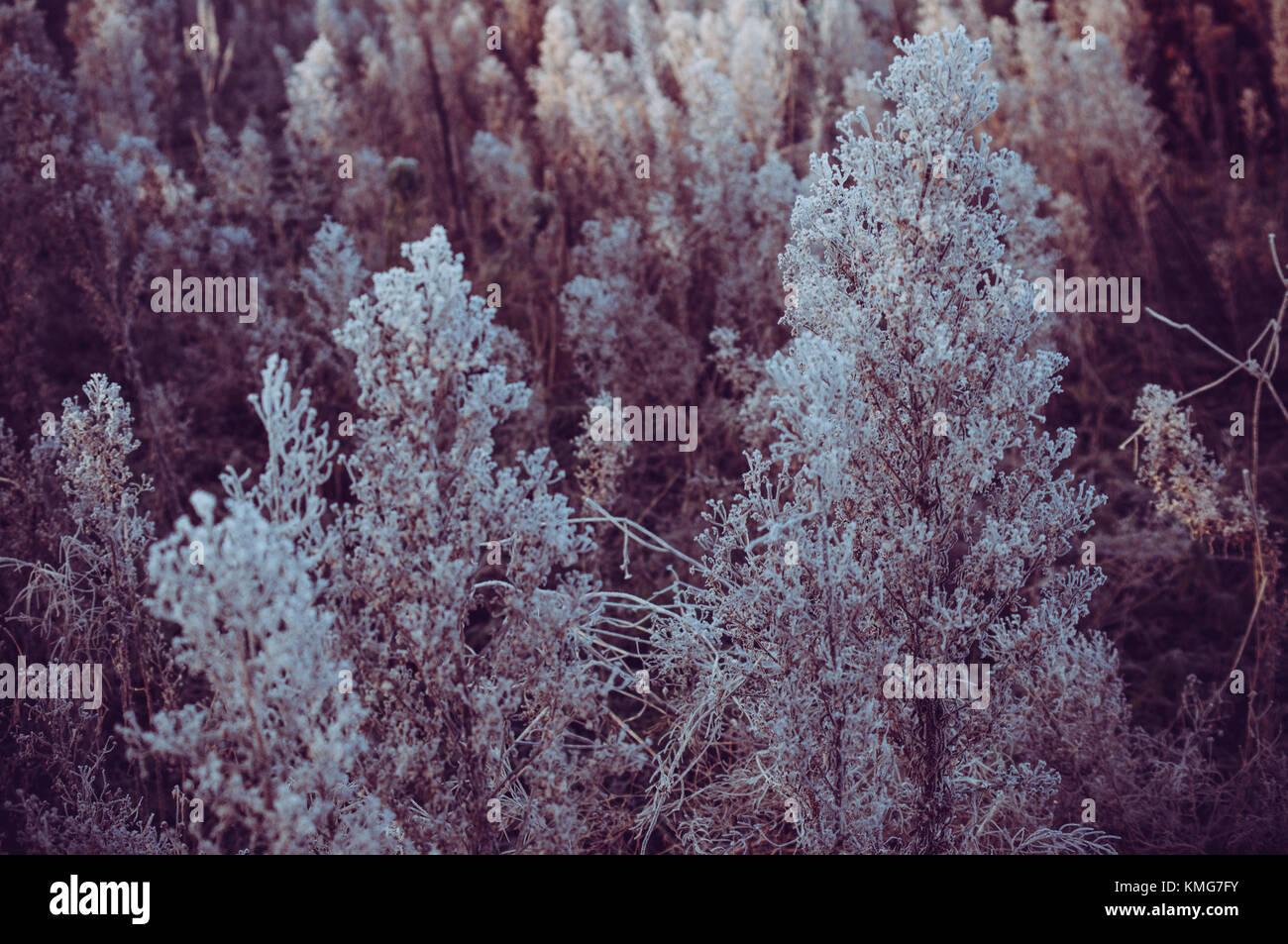 Winter frozen plants.Old garden. - Stock Image