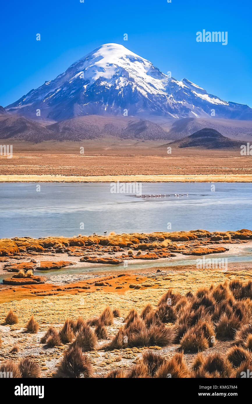 Enormous snowcapped Nevado Sajama volcano in the National Park, Bolivia - Stock Image