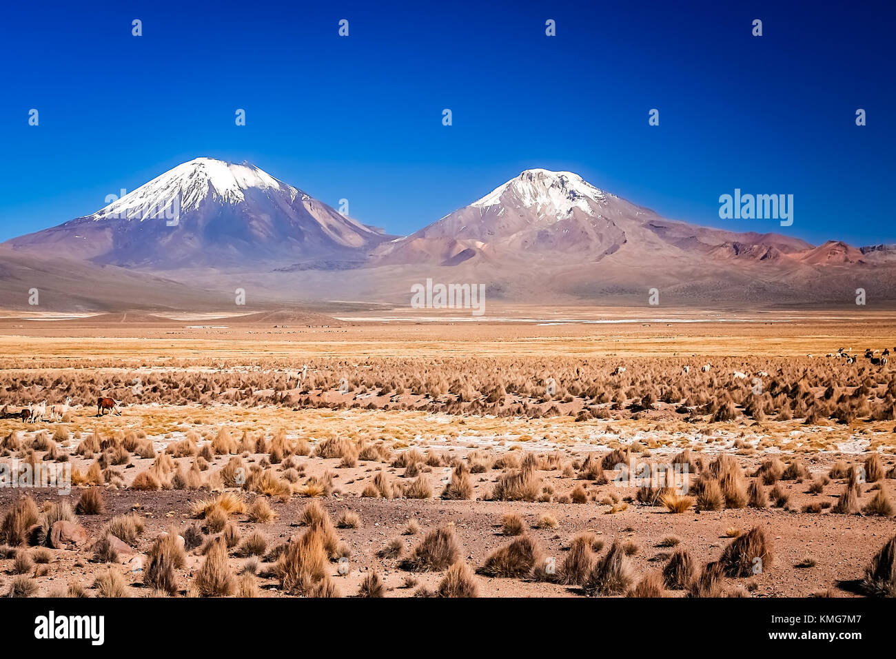 Enormous volcano Nevado Sajama and Parinacota volcanoes located in National Parks in Chile and Bolivia - Stock Image