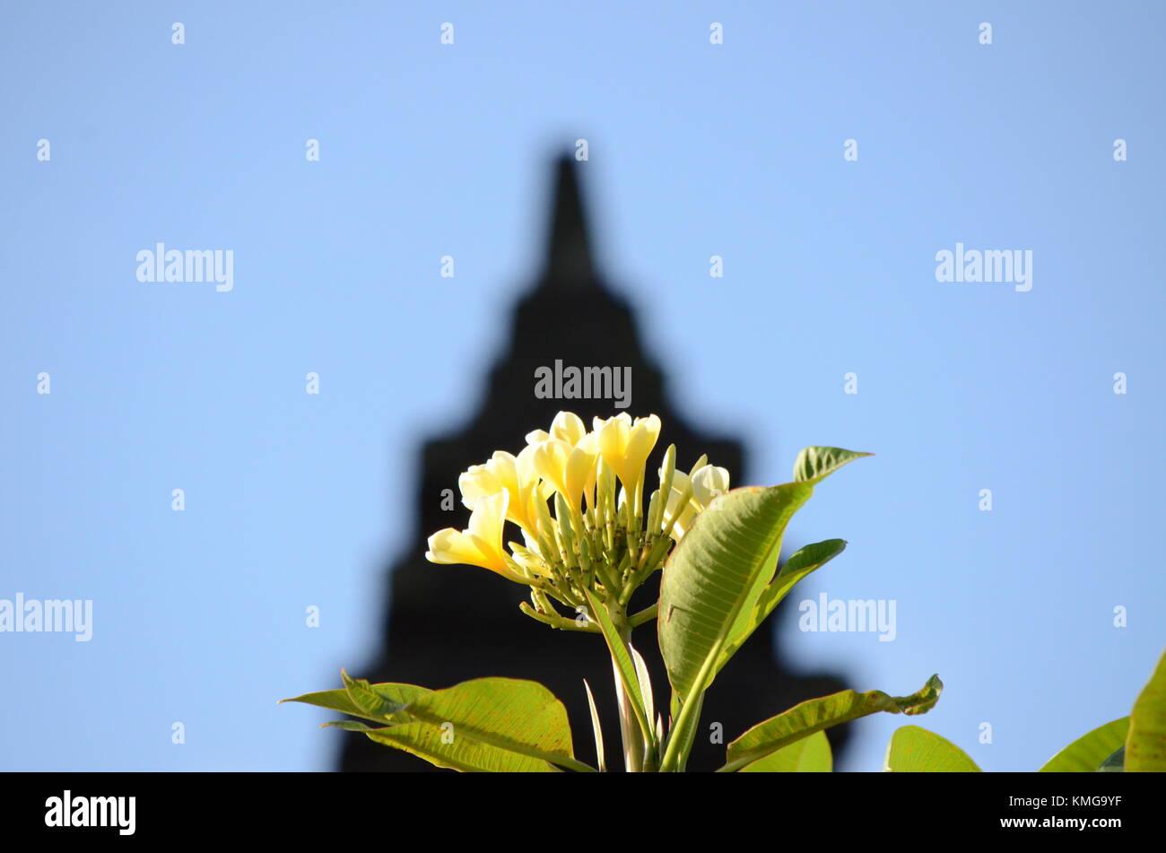 Frangipani flower inside Pura Parahyangan Agung Jagatkarta -Taman Sari Gunung Salak, Bogor - West Java - Stock Image