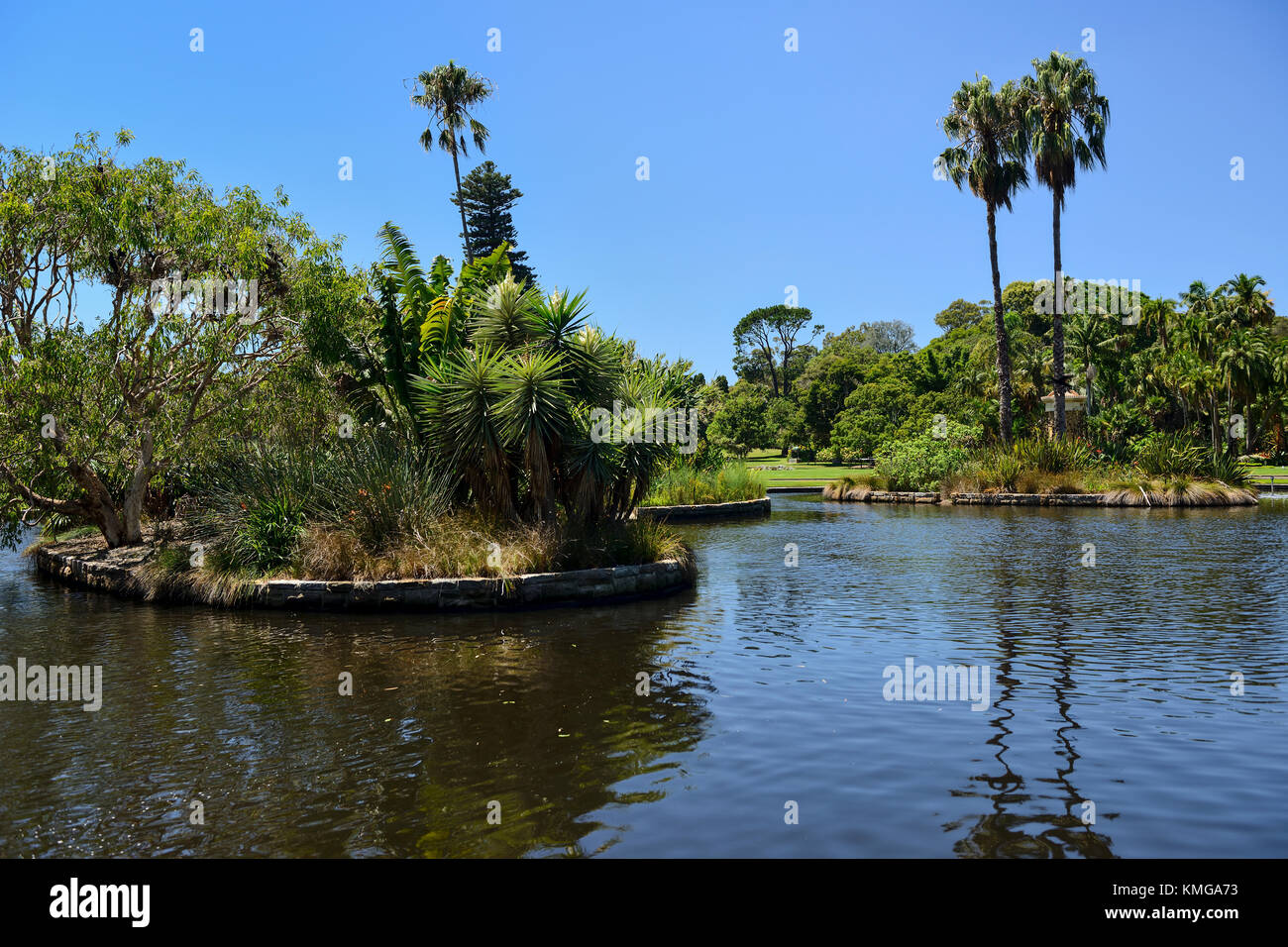 Main pond in Royal Botanic Garden Sydney, New South Wales, Australia - Stock Image