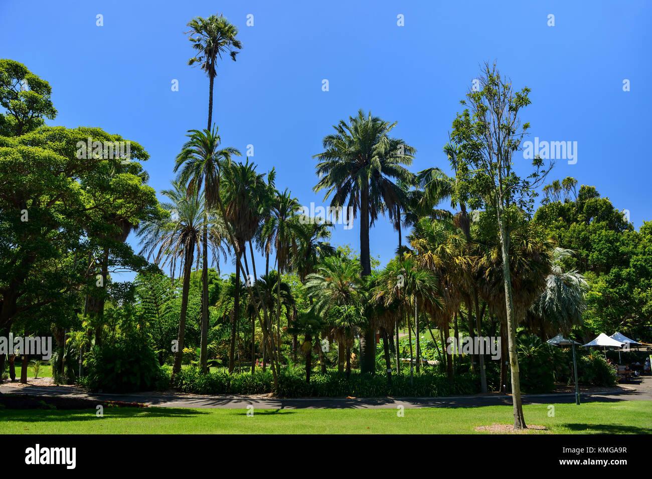 Palm trees in Royal Botanic Garden Sydney, New South Wales, Australia Stock Photo