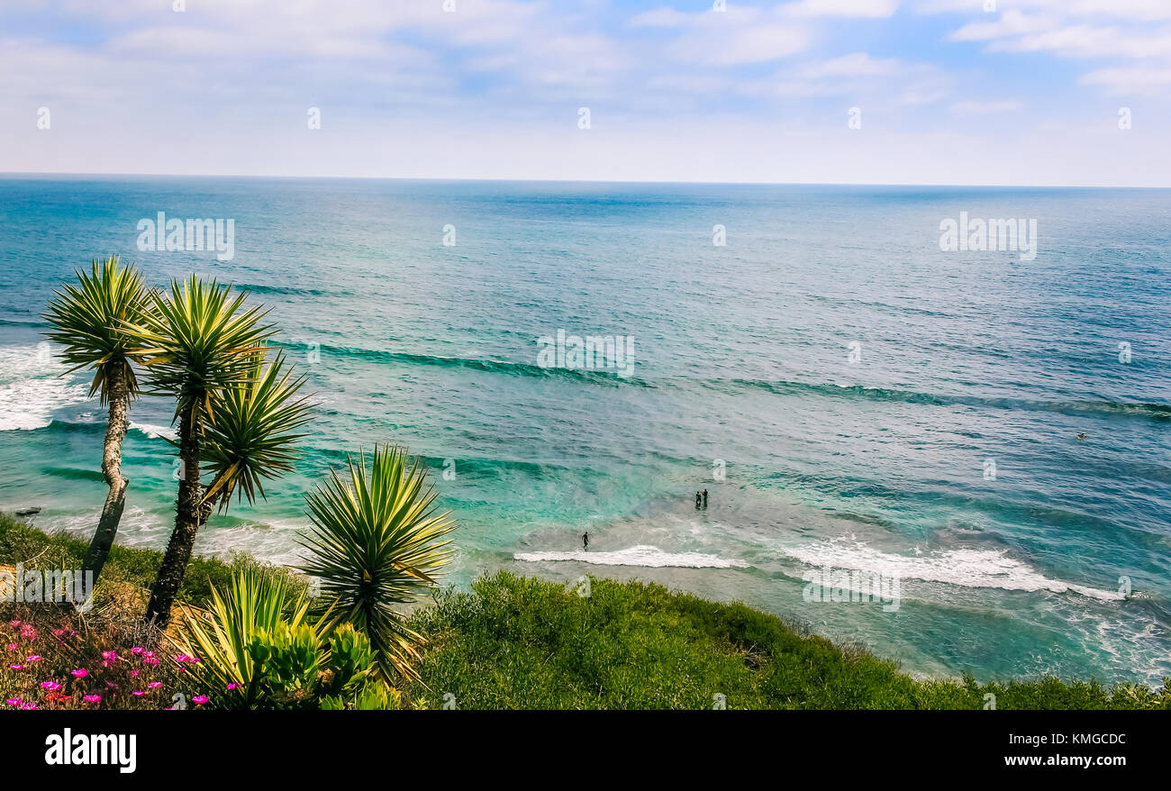 SAN DIEGO   JULY 16, 2016   Palm Trees And Surfers In San Diegou0027s Meditation