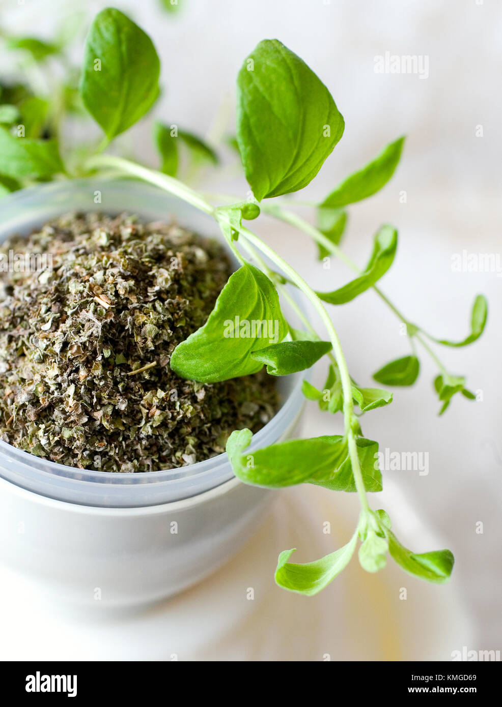 fresh and dried marjoram in a white cup on white background - Stock Image