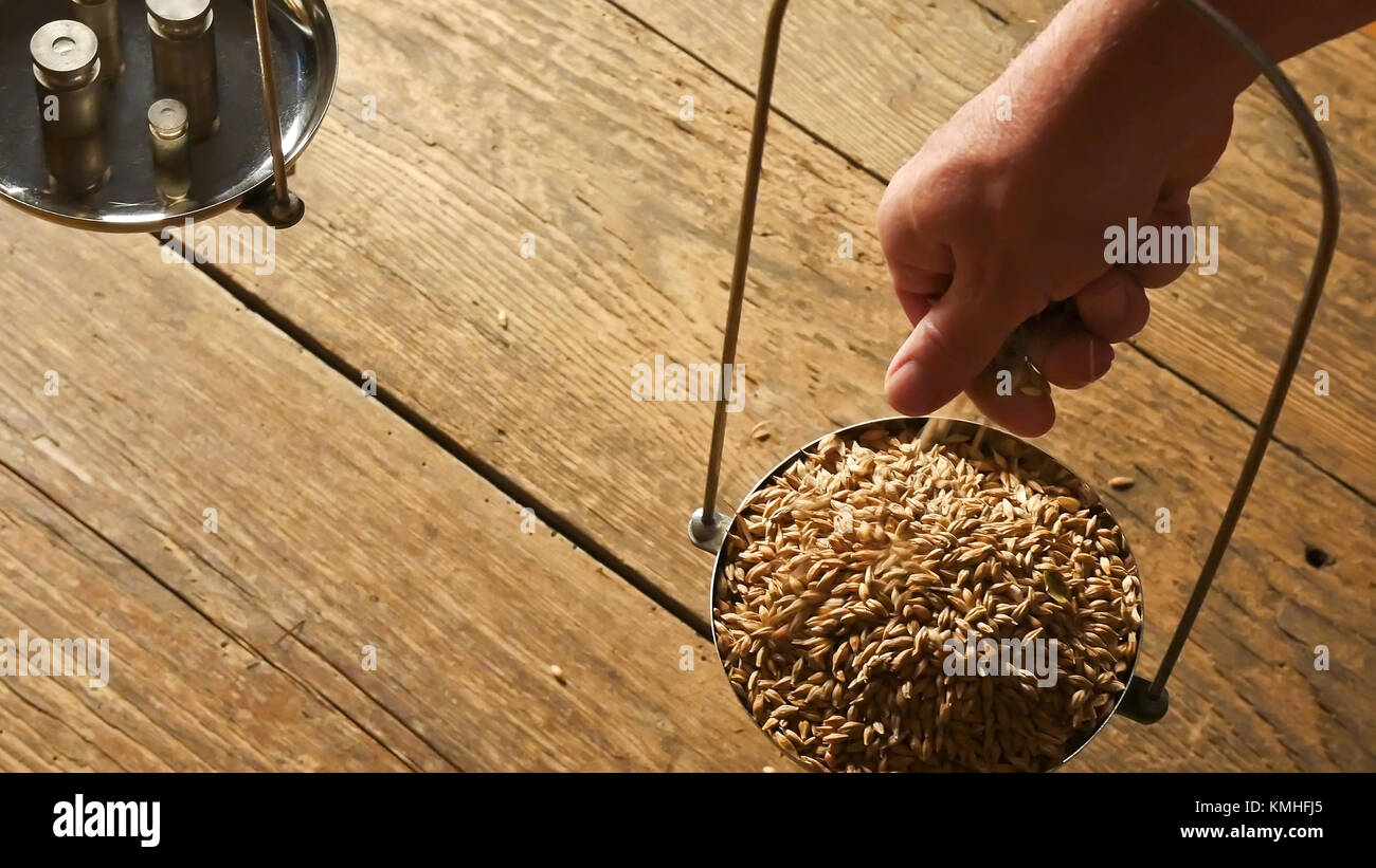 A Man Weighs Malt. View from Above. - Stock Image